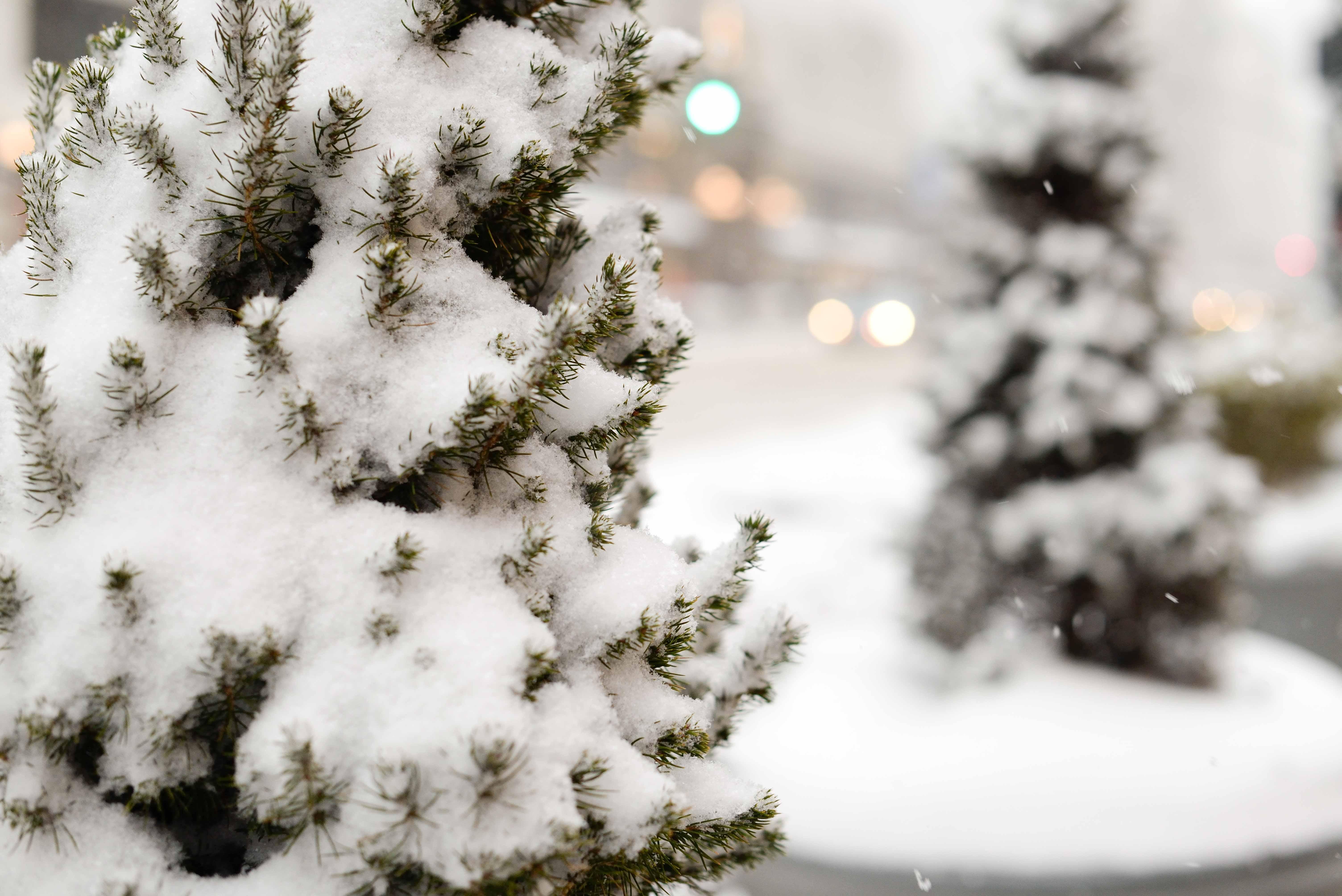 Snowflakes In Manhattan Puffer Coats Camp Socks And Bean