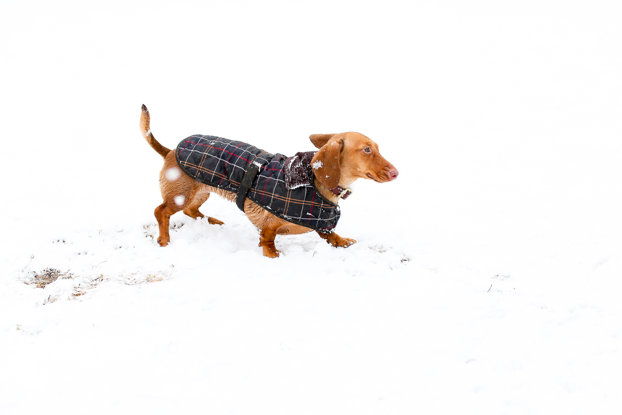 Barbour Tartan Dog Jacket-12