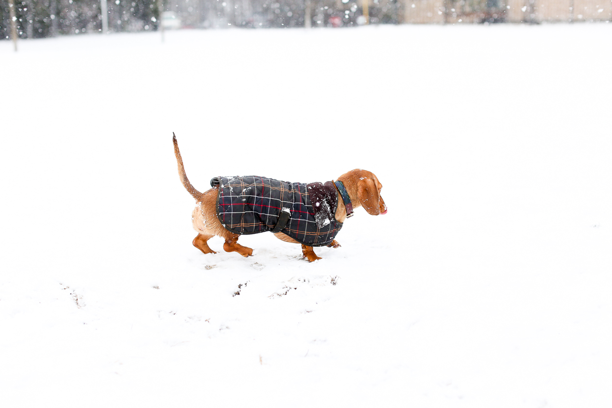 Barbour Tartan Dog Jacket-16