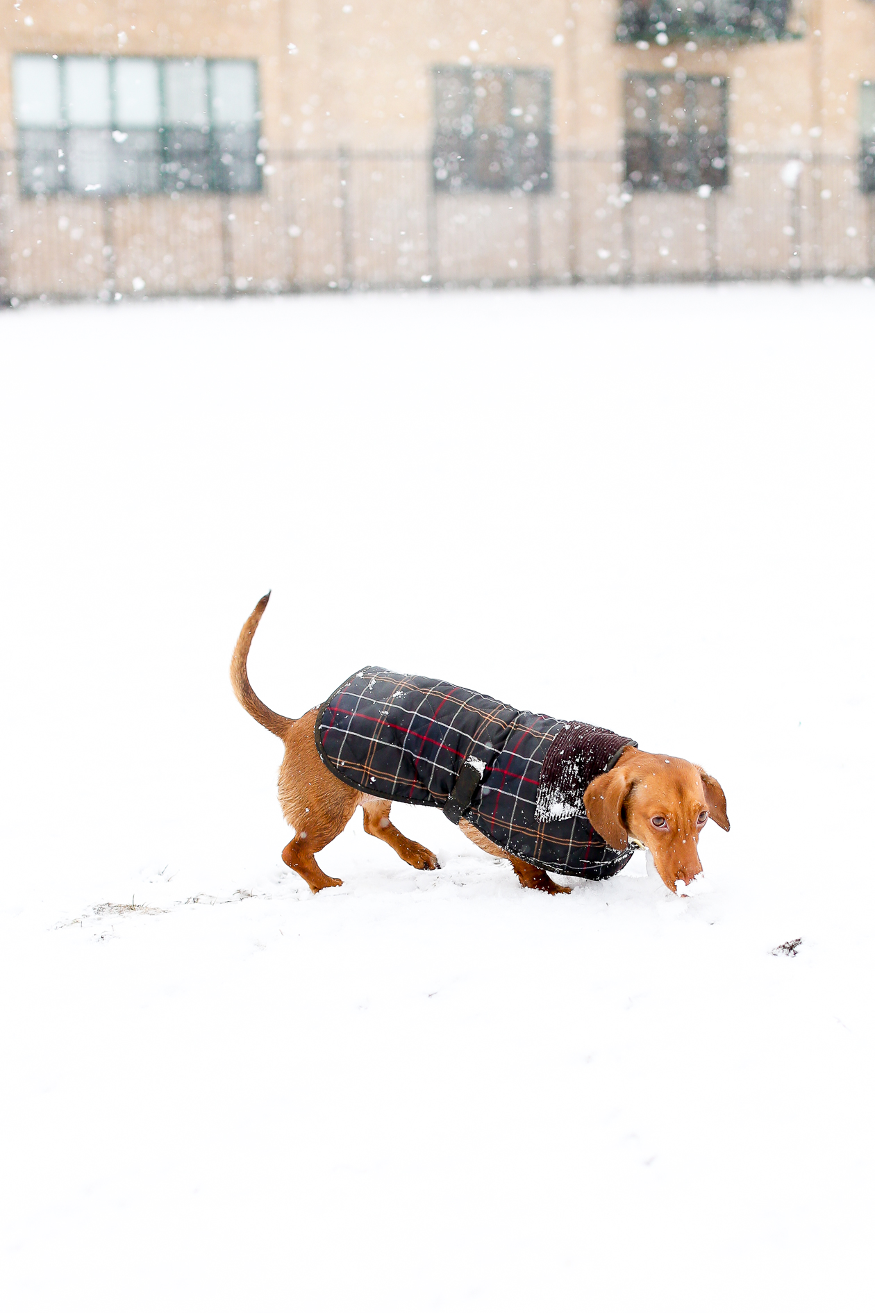 Barbour Tartan Dog Jacket-22