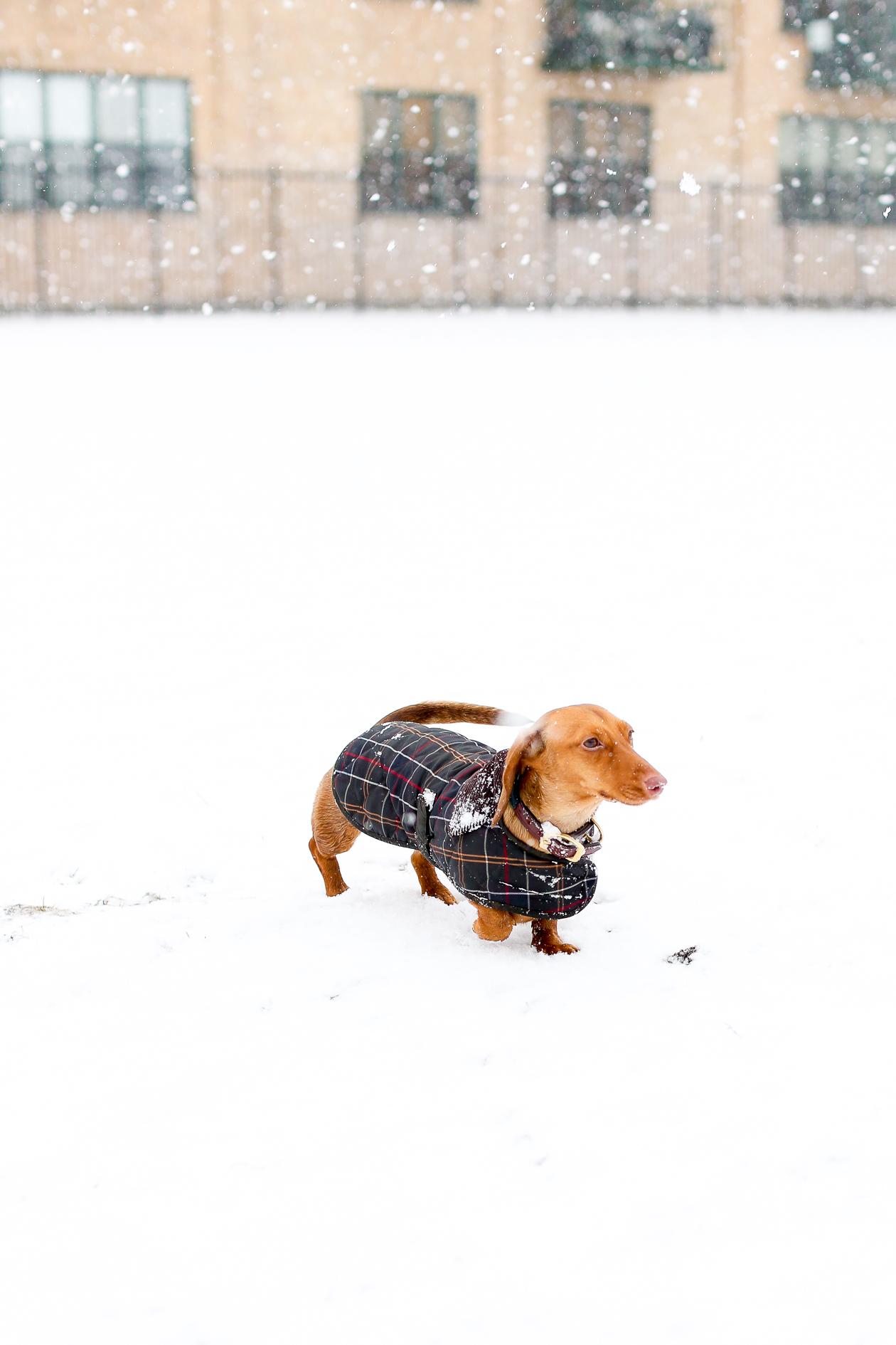 Barbour Tartan Dog Jacket-24