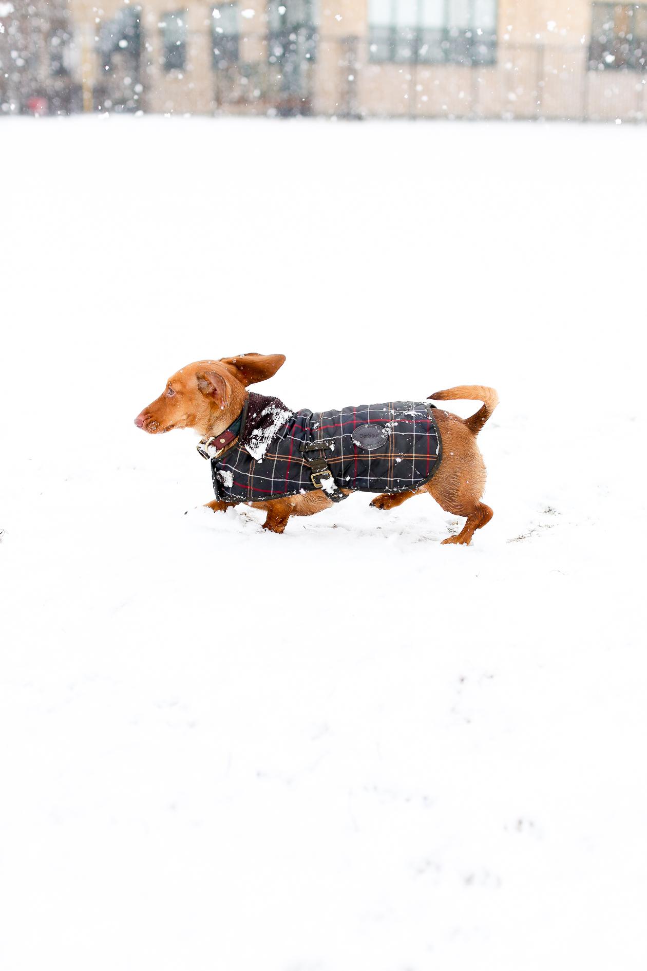 Barbour Tartan Dog Jacket-30