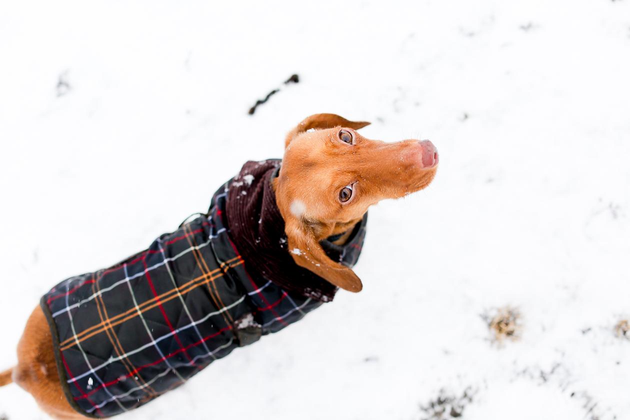 Barbour Tartan Dog Jacket-48