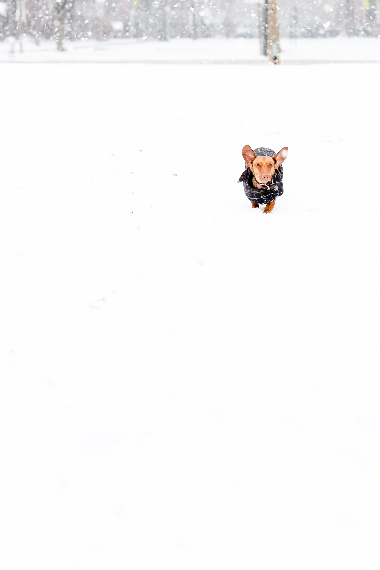 Barbour Tartan Dog Jacket-51
