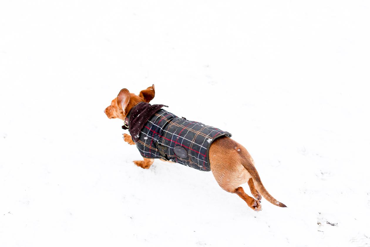 Barbour Tartan Dog Jacket-57