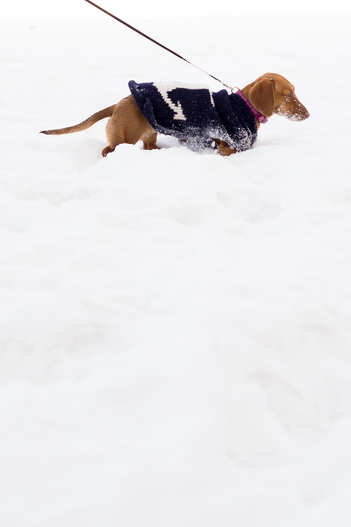 Noodle-Snow-4