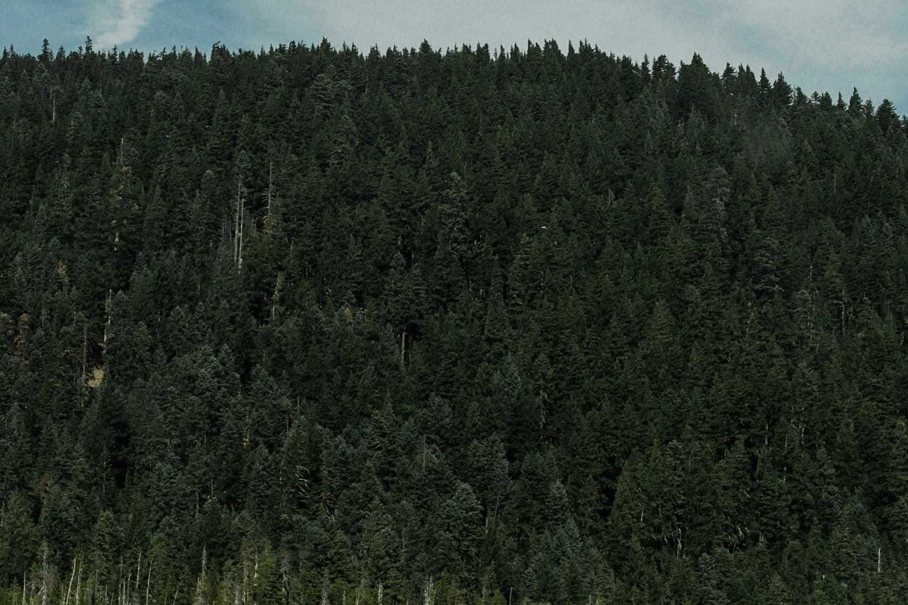Mount Hood | Kelly in the City