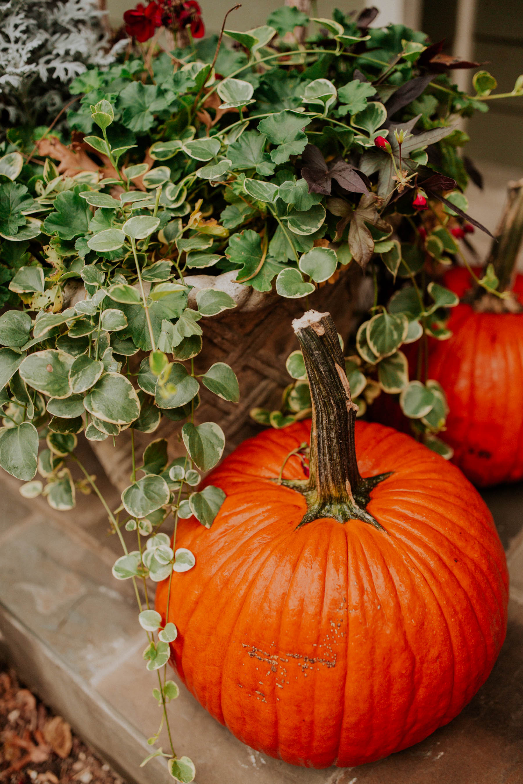Fall Porch Decor: Pumpkins and Plants