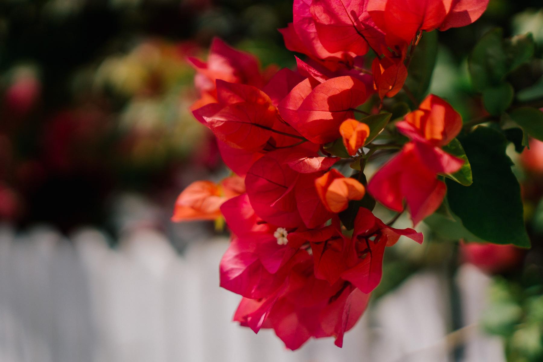 Flowers in Hope Town Harbor