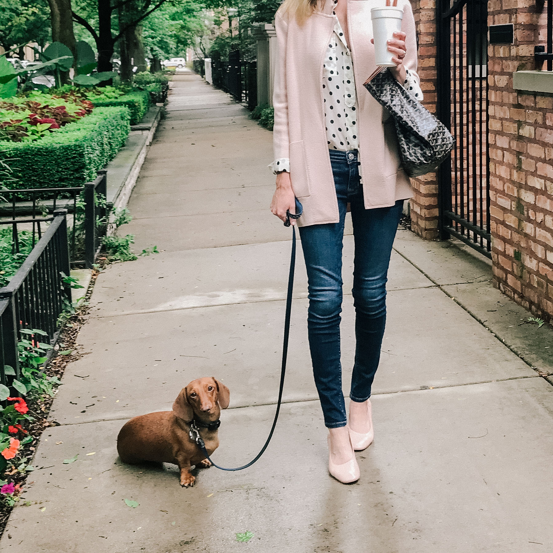 J.Crew Sweater Blazer/ Everlane Day Heel / Goyard Bag / Old Polka Dot Top