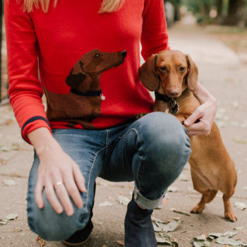 All the Dachshund Clothing