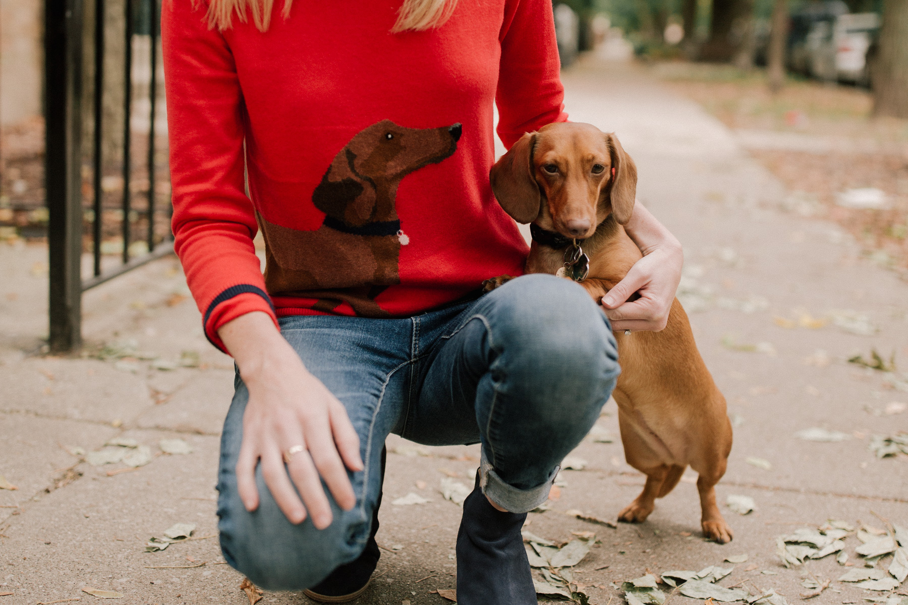 Dachshund Clothing - Kelly in the City