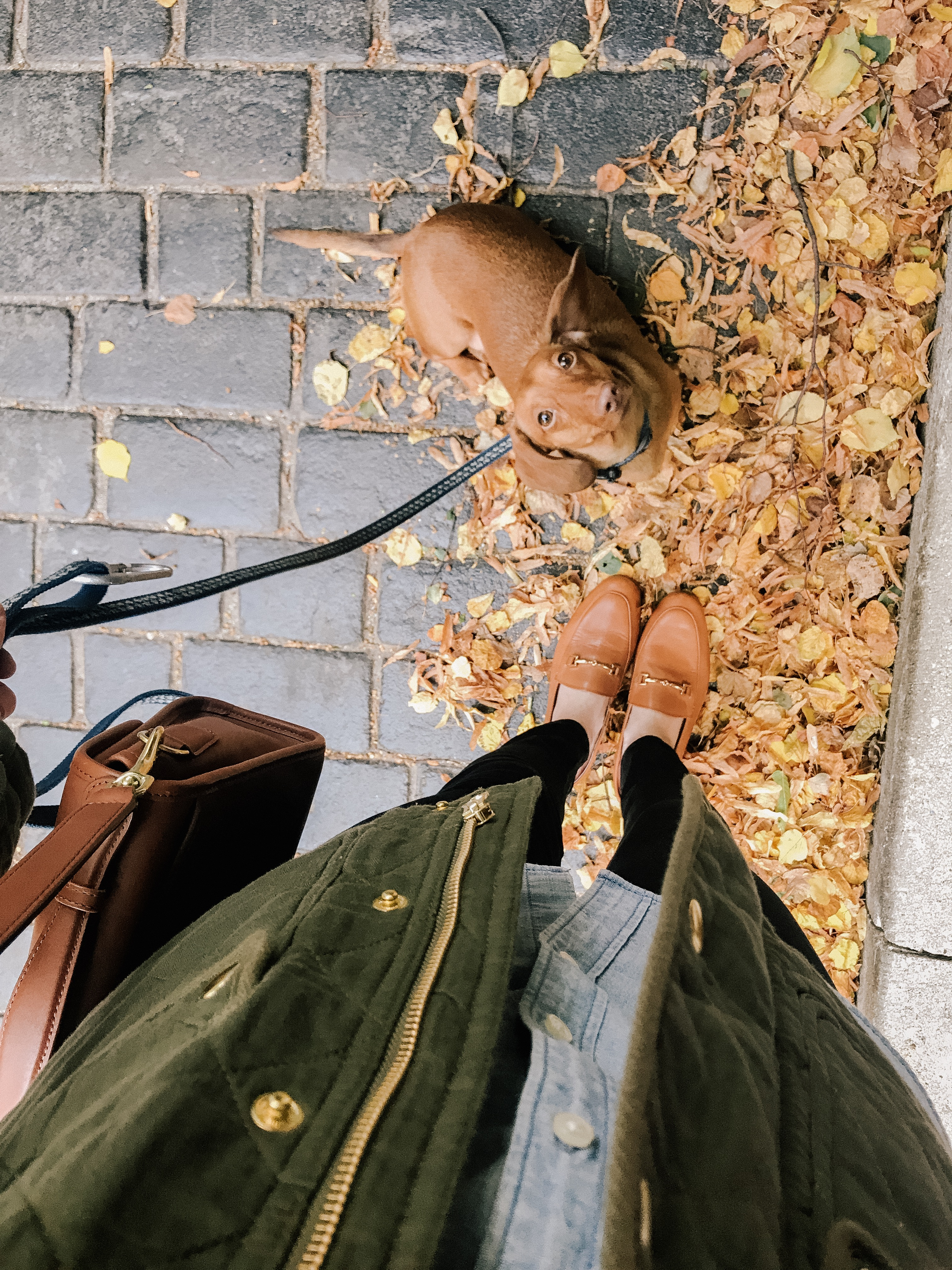 060cefcb9 Shopbop Sale: What to Buy | Kelly in the City | Bloglovin'