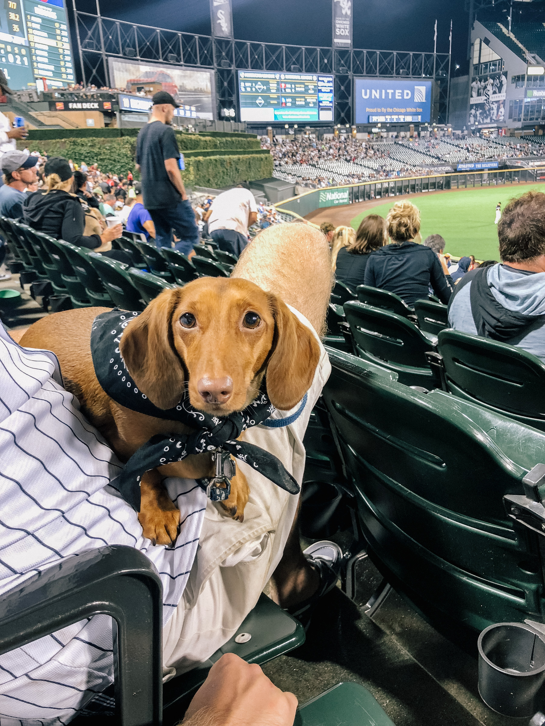 Dog Day with the Sox by Kelly Larkin | Kelly in the City