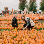 Pumpkin Picking Road Trip