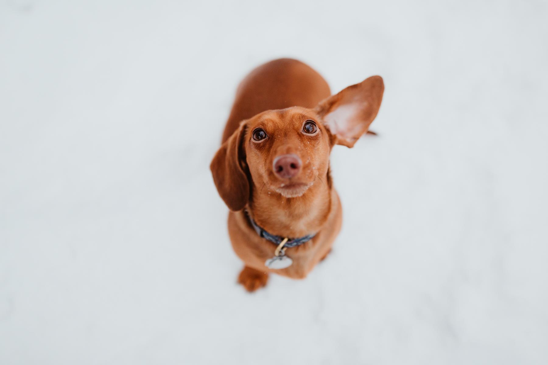 Short Dog Probs & Noodle