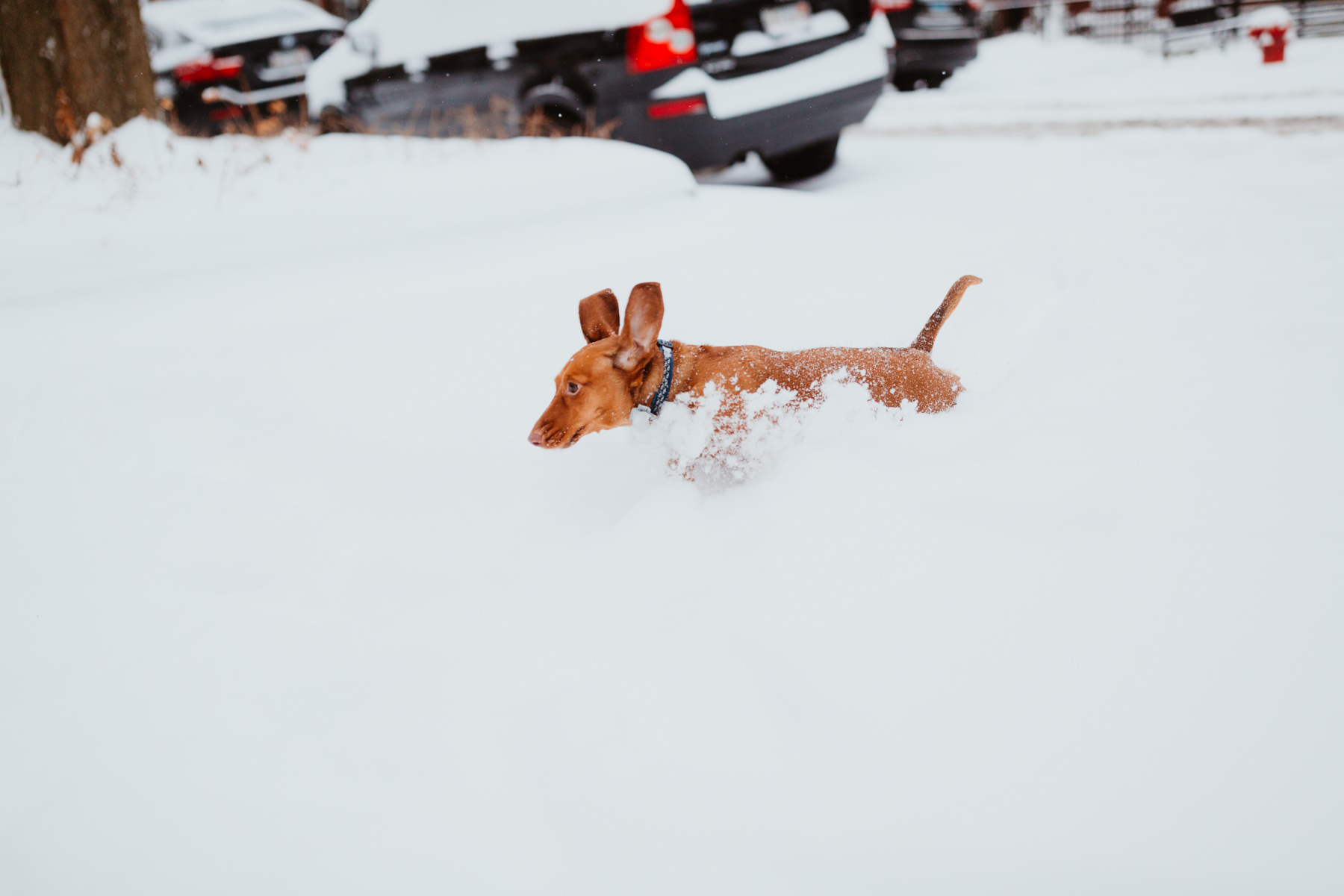 Noodle is running in the snow - Kelly in the City