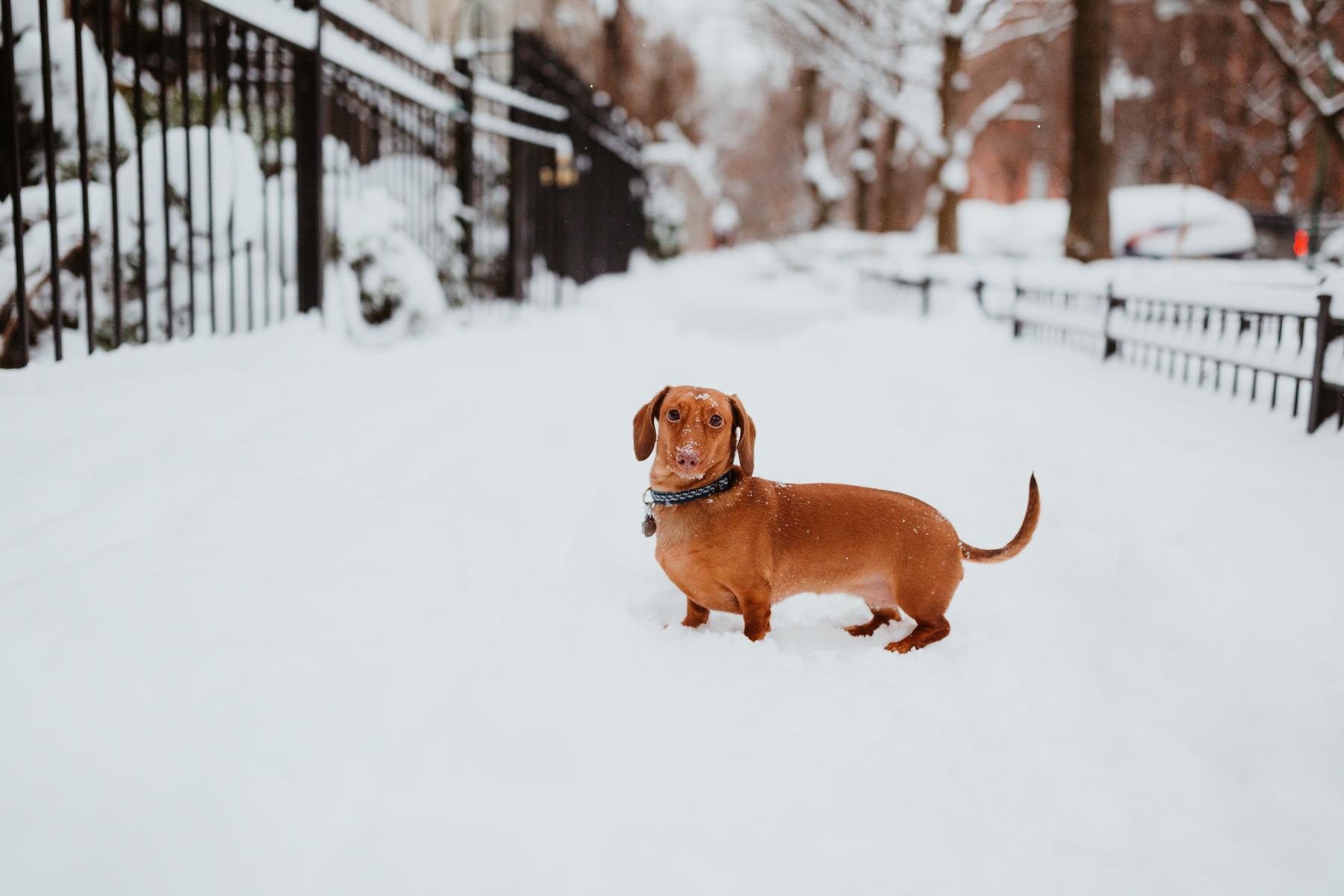 Noodleloves the snow