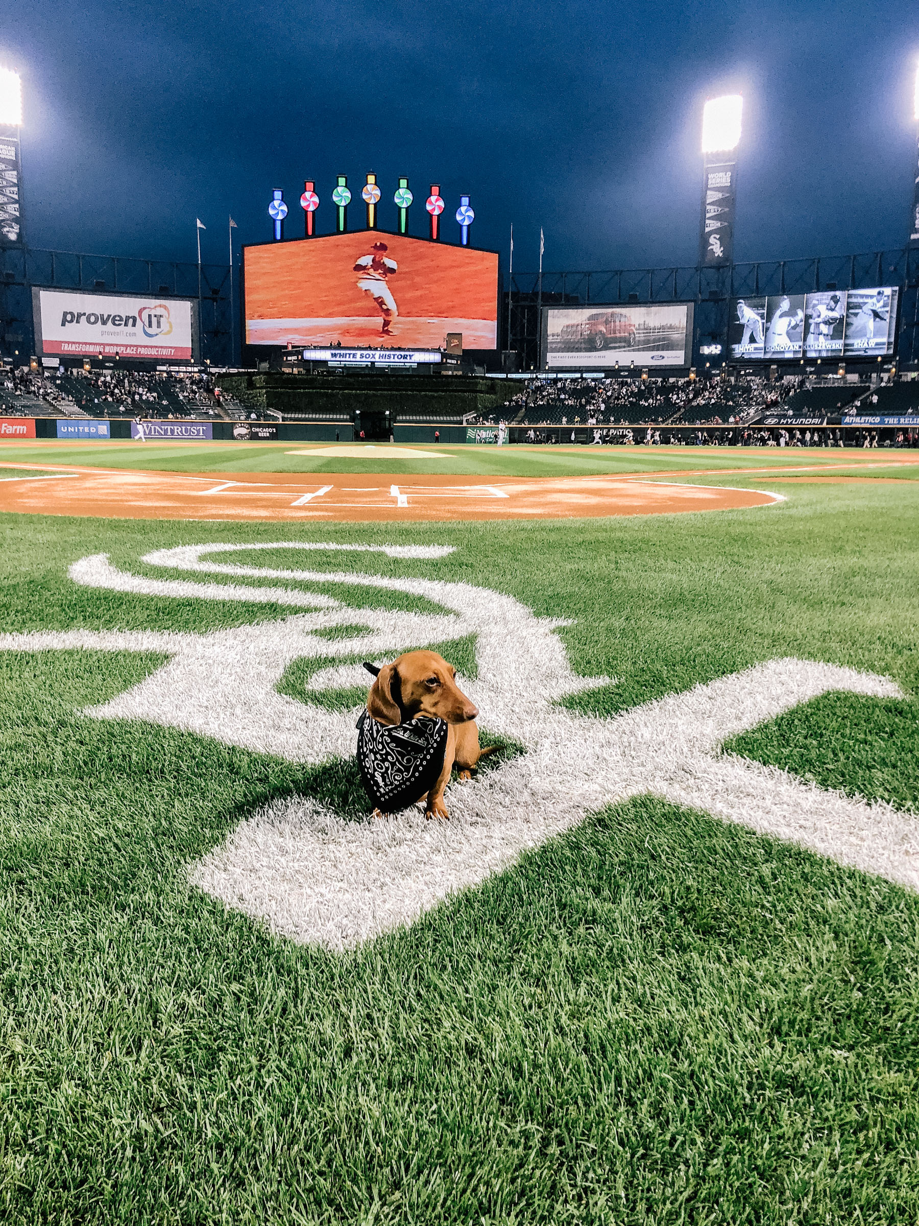 Dog Day with the Chicago White Sox