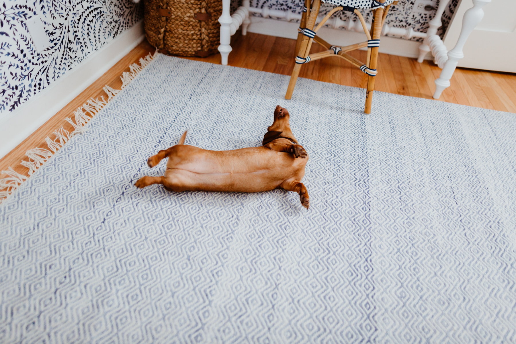 Performance Indoor/Outdoor Rug (So soft!)