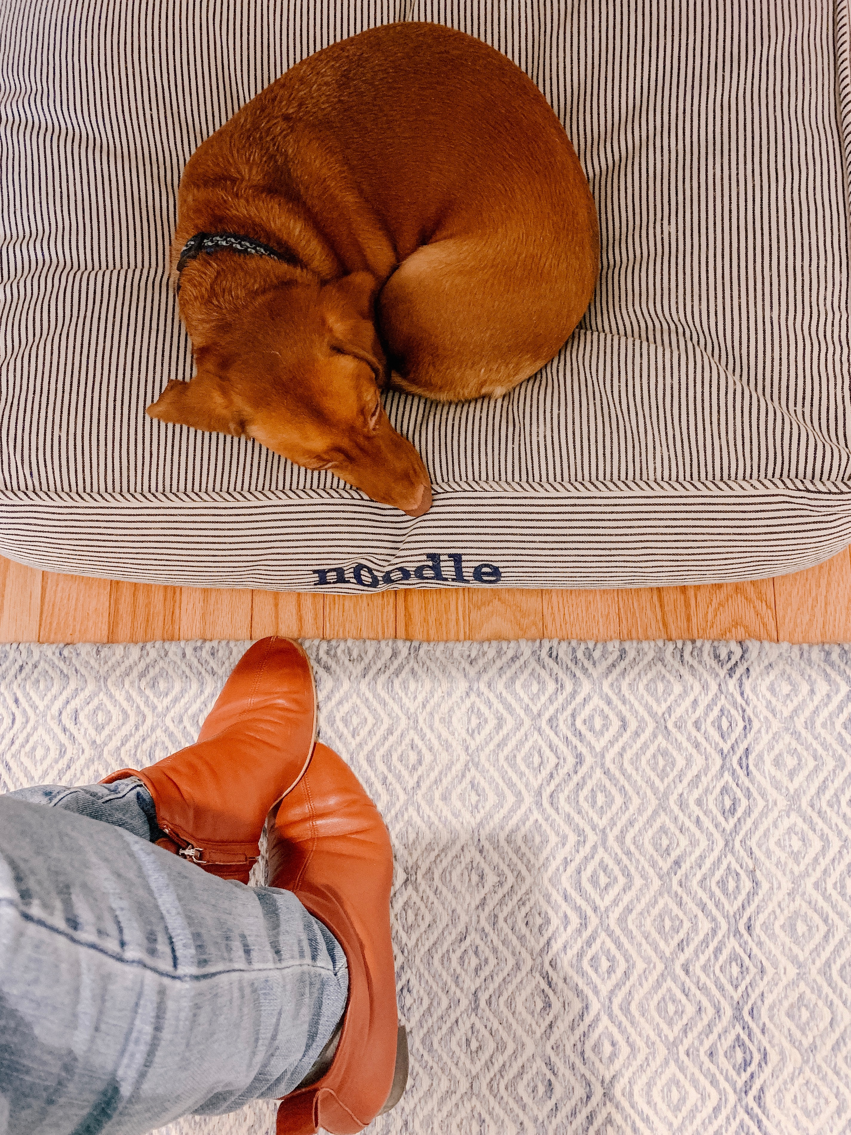 Photo Description: Dog Bed(Isn't this one cute, too?!) / Jeans / Rug (from my office reveal!) / Everlane Day Boot