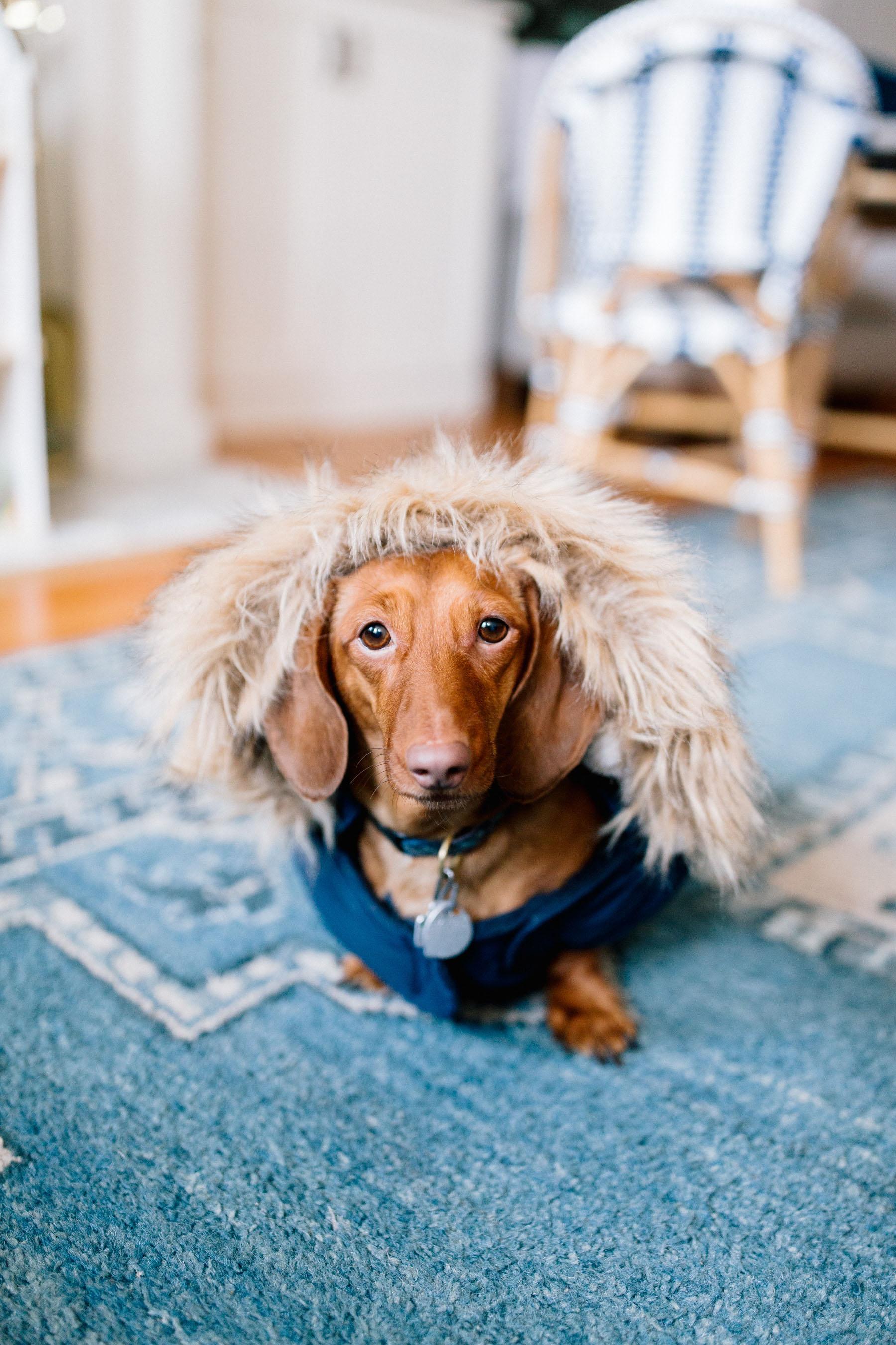 Snorkel Dog Jacket