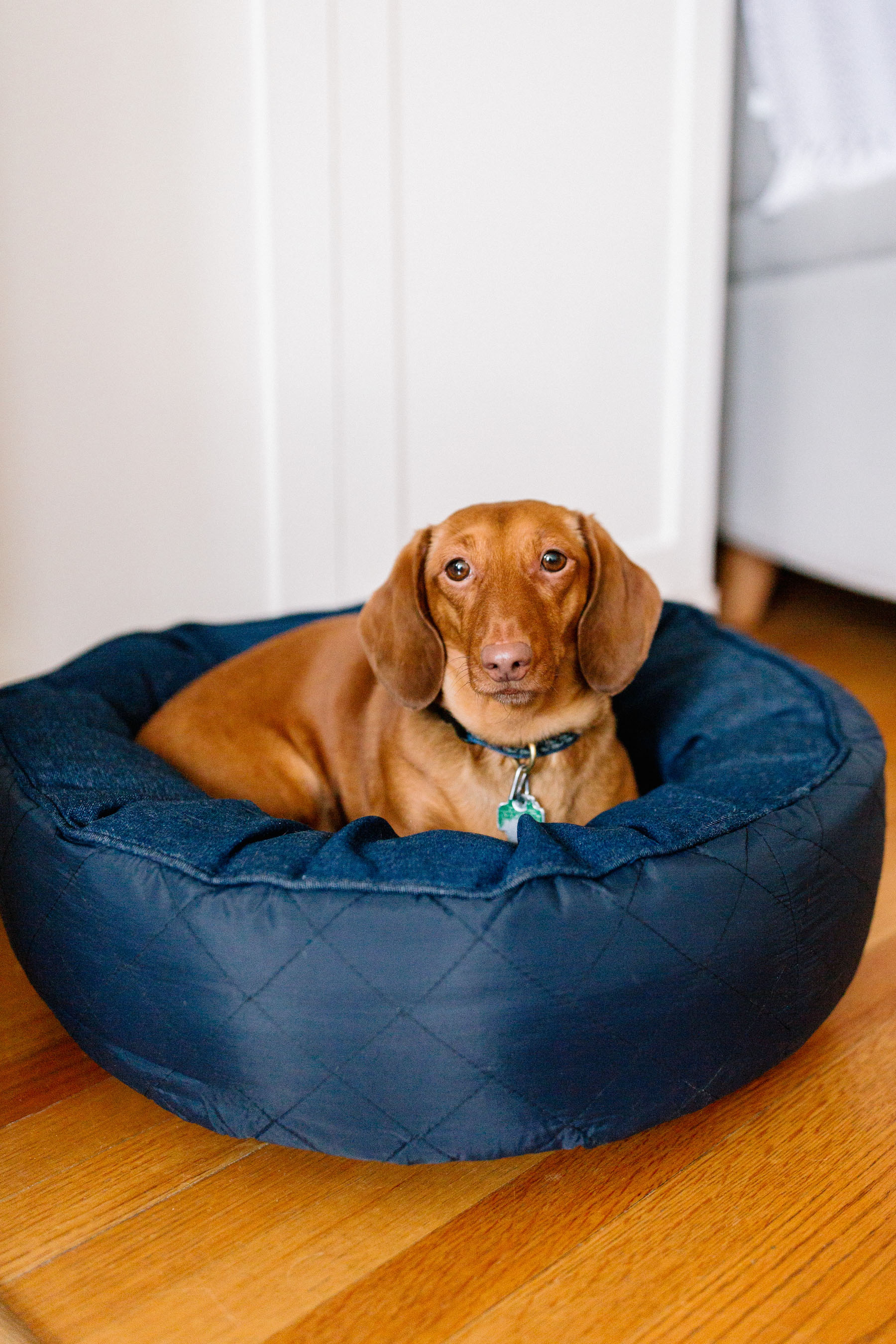 The Cutest Dog Products - solid round bed