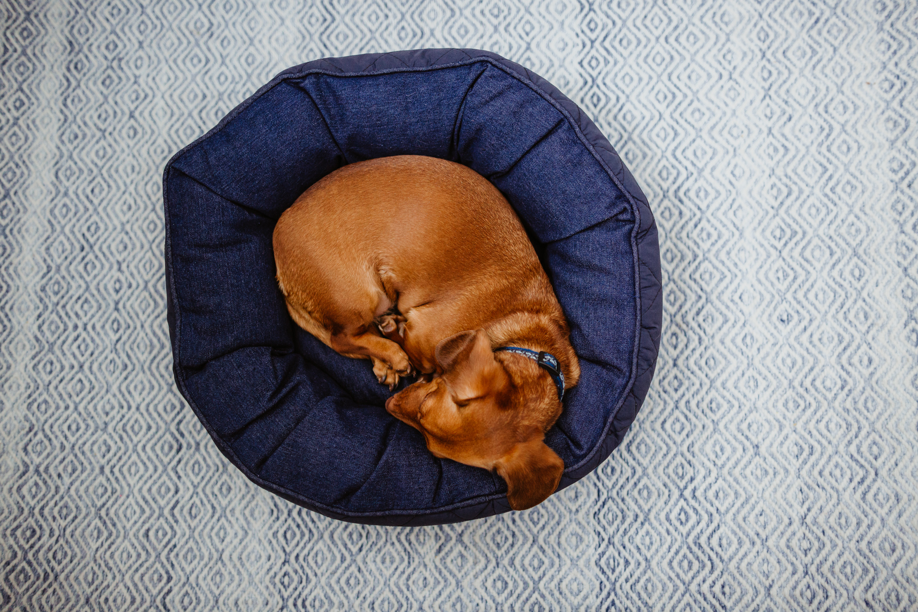 The Cutest Dog Products - Solid round dog bed