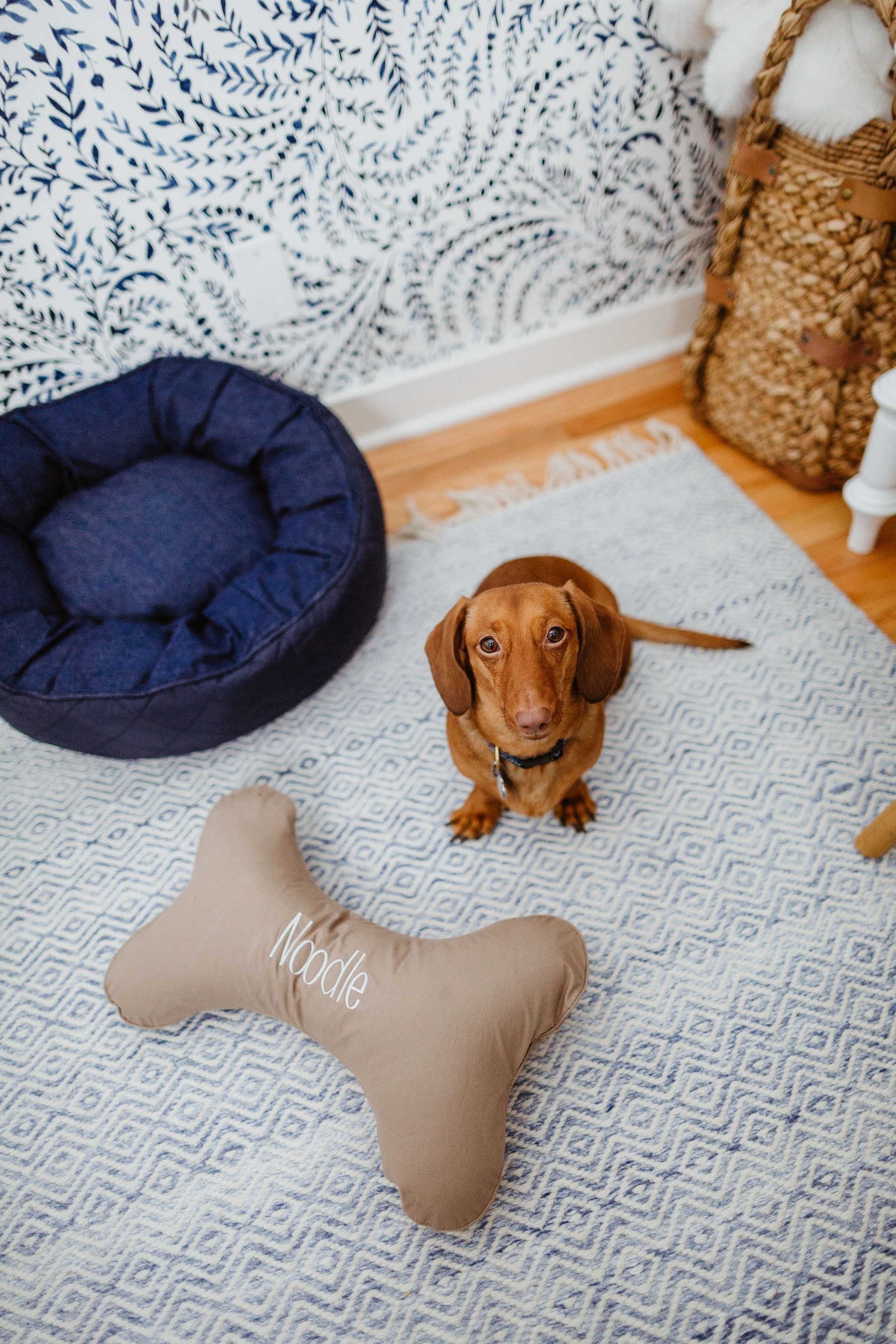 The Cutest Dog Products