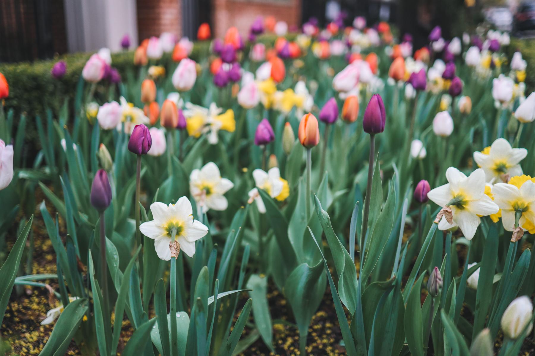 Flowers - Springtime