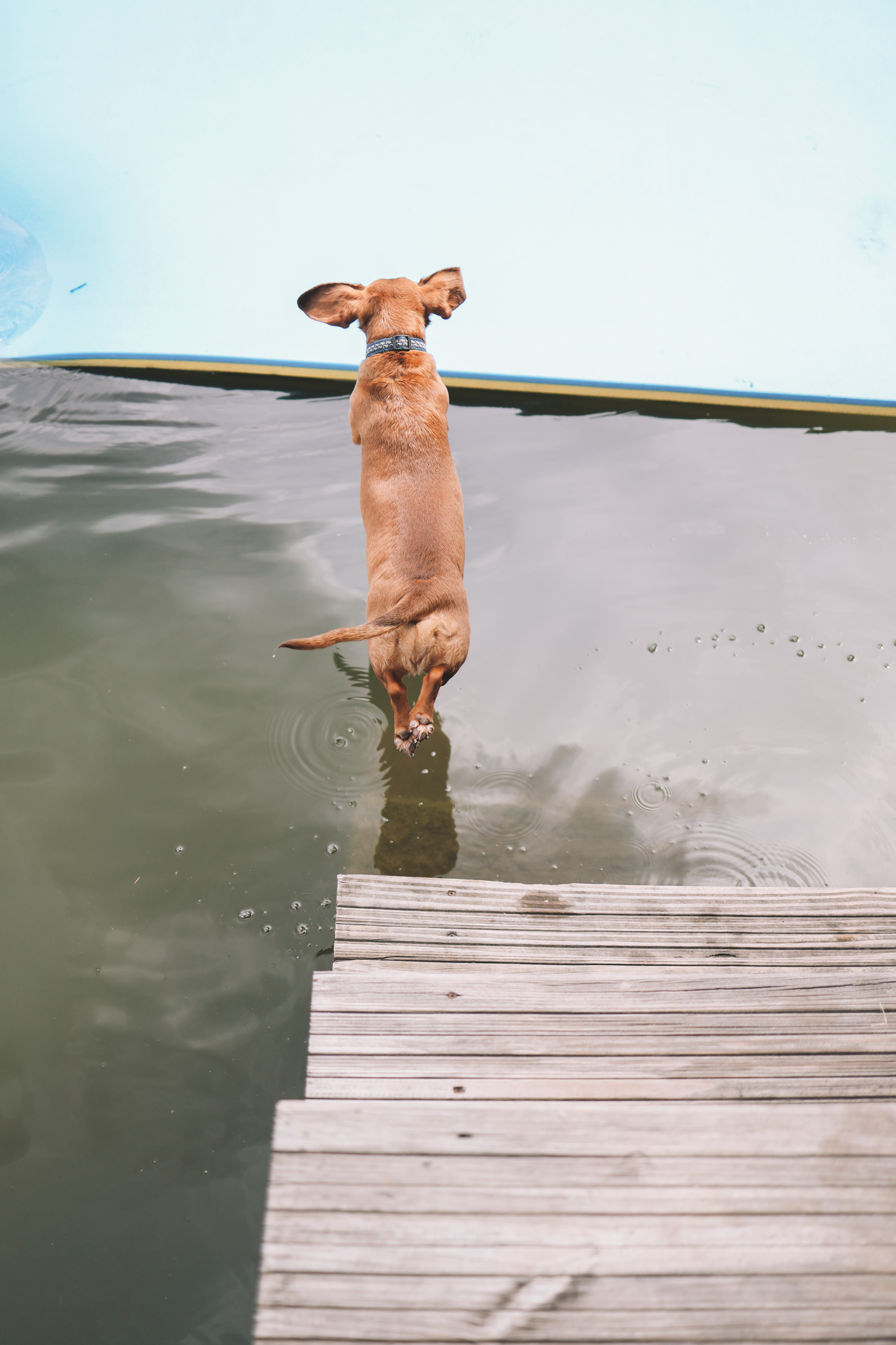 dog jumping in the lake