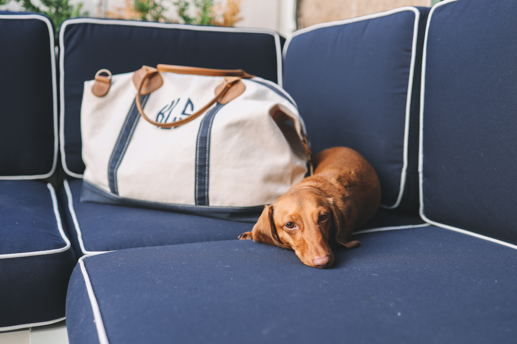 a dog on the sofa that is navy with a white and blue bag