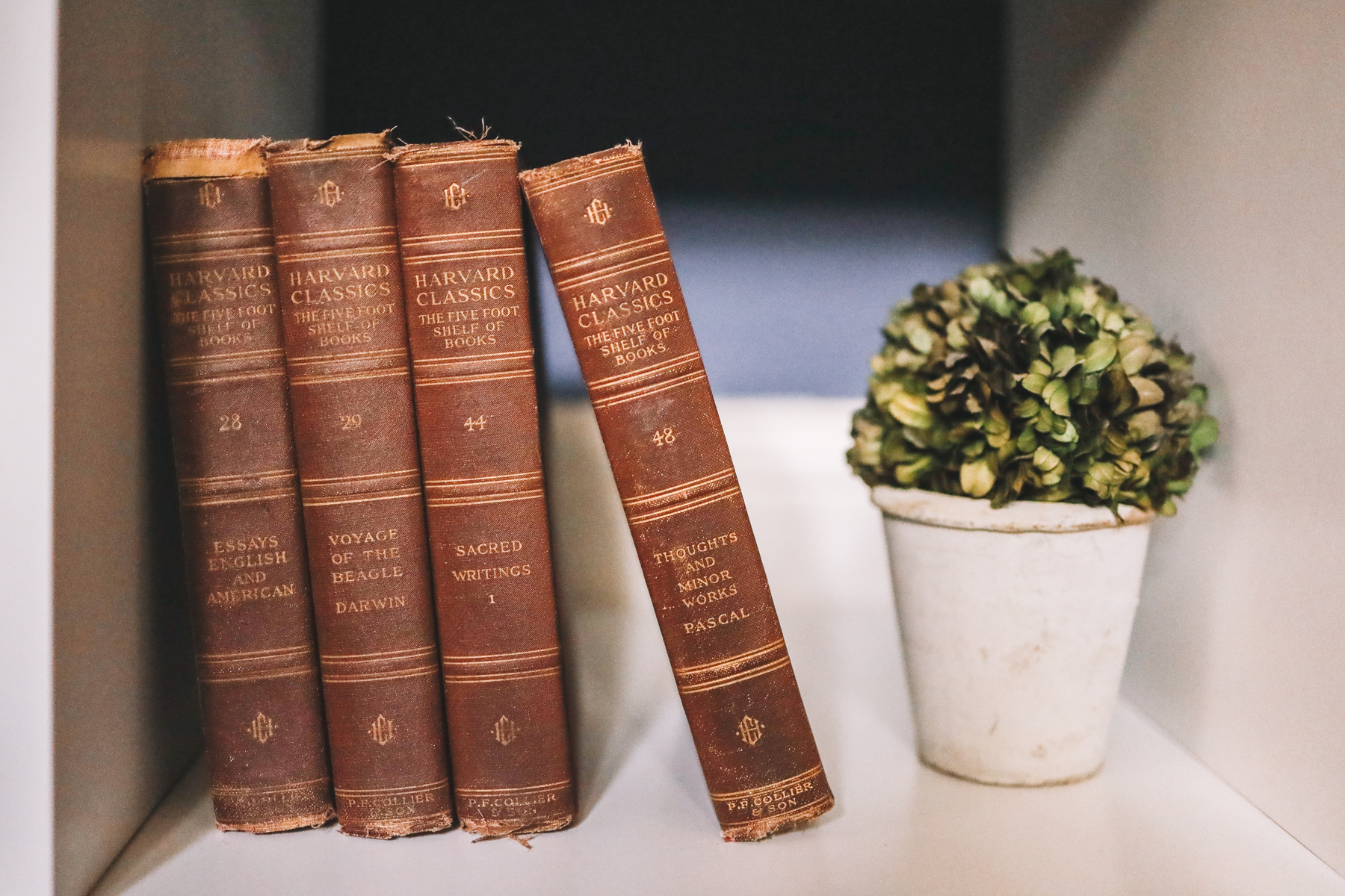 old books and a plant in a navy office