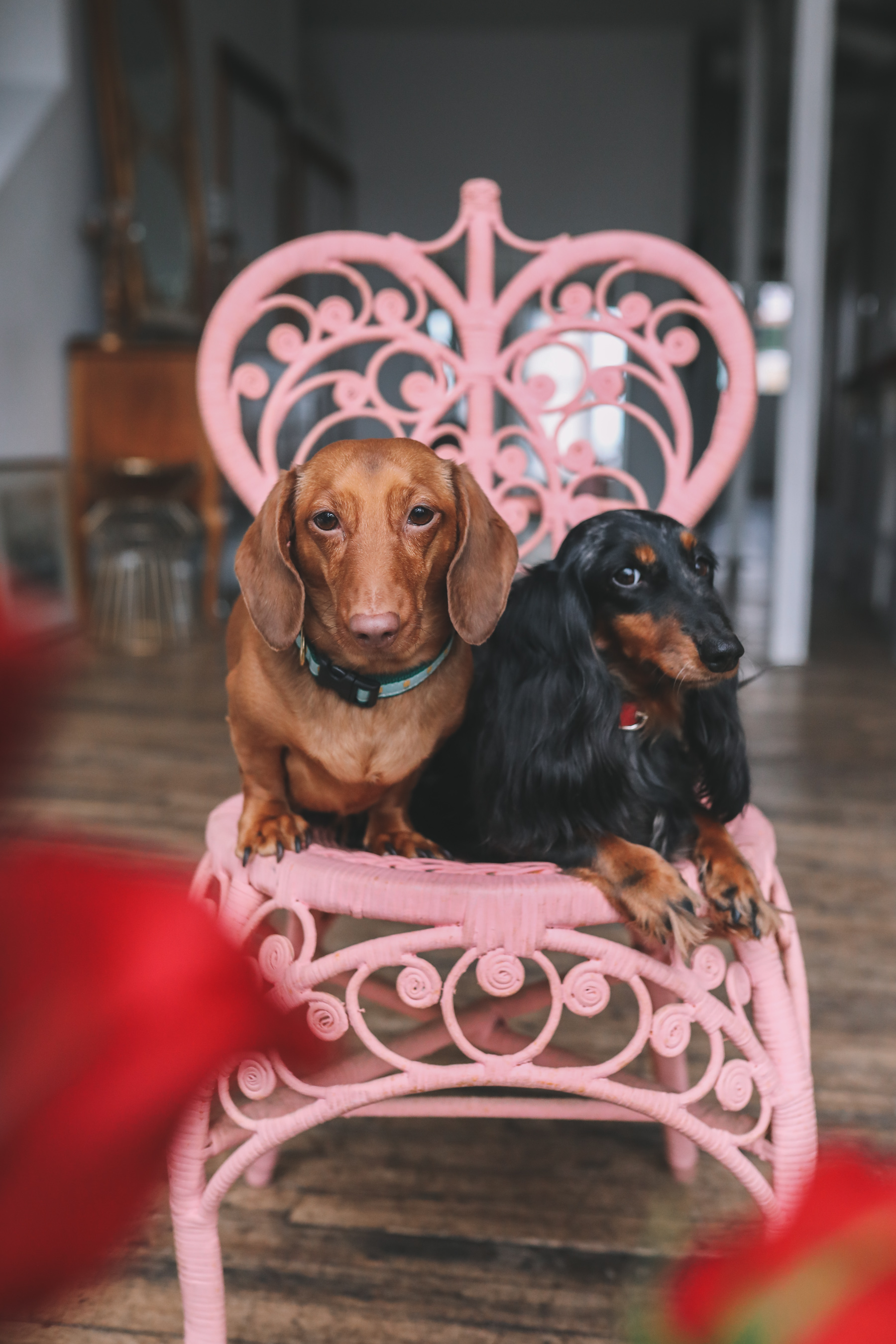 Galentine's Day with Noodle + Ember