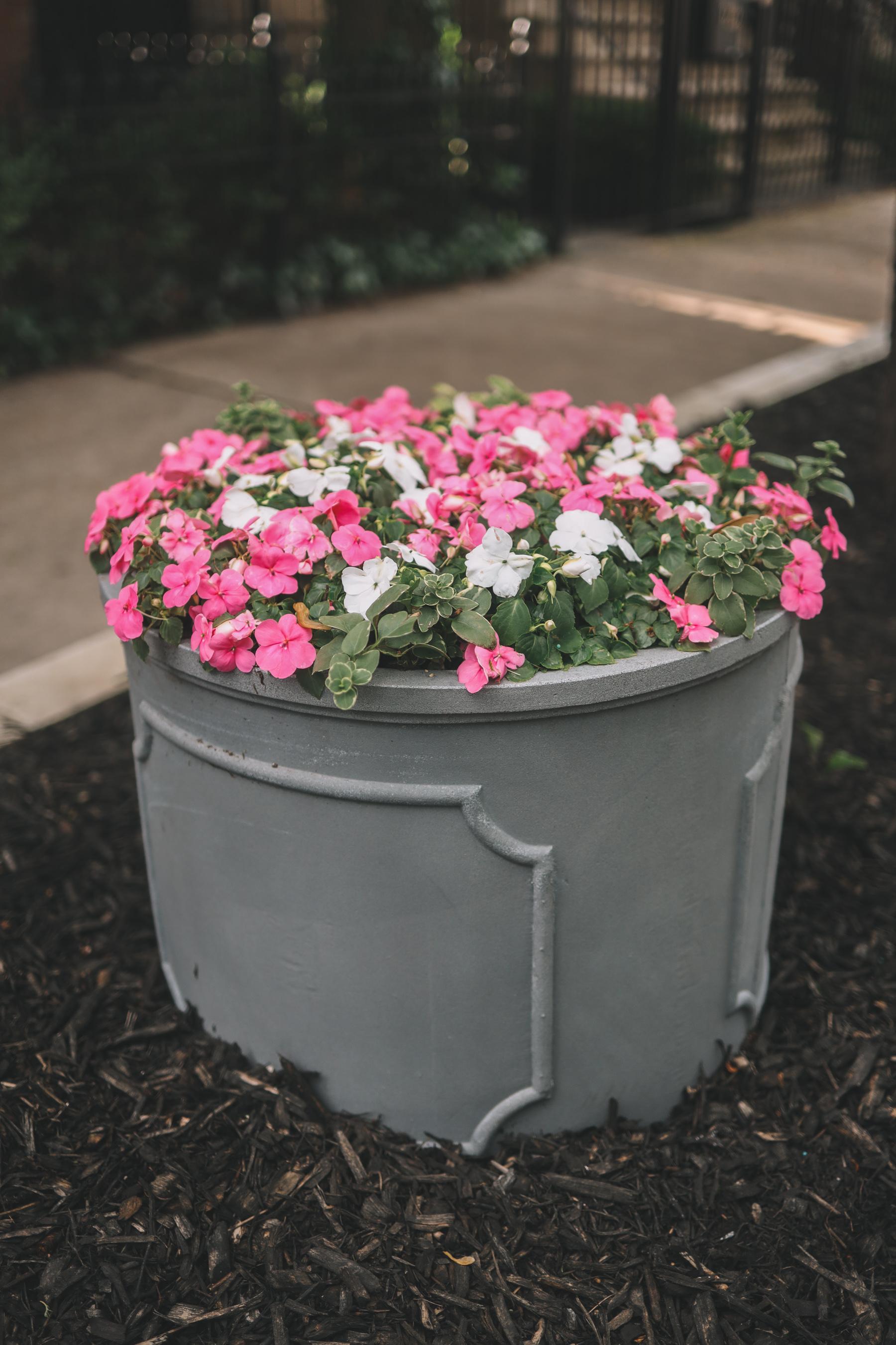 Planting Impatiens