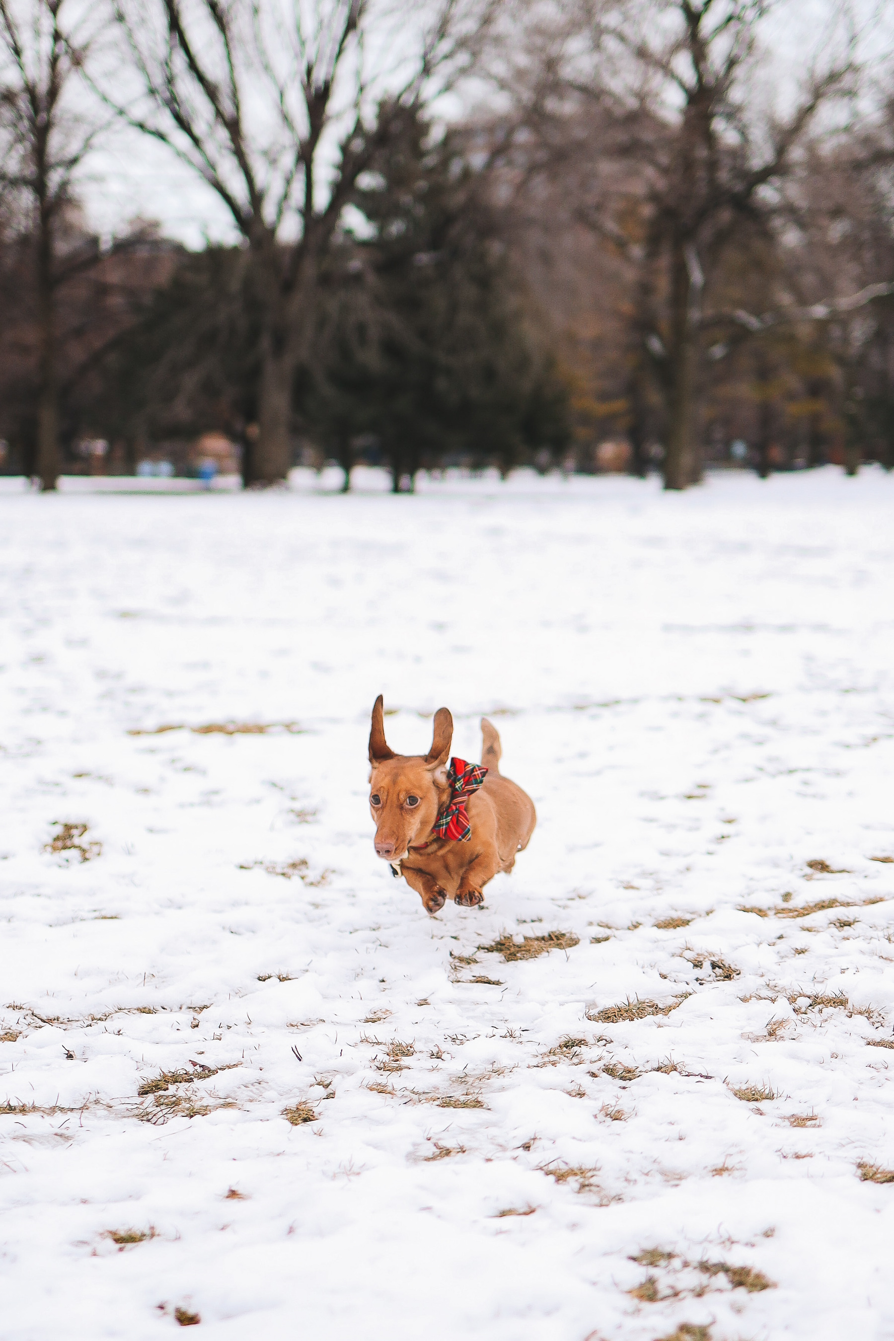 dog on the snow | Oz Park Snow Day