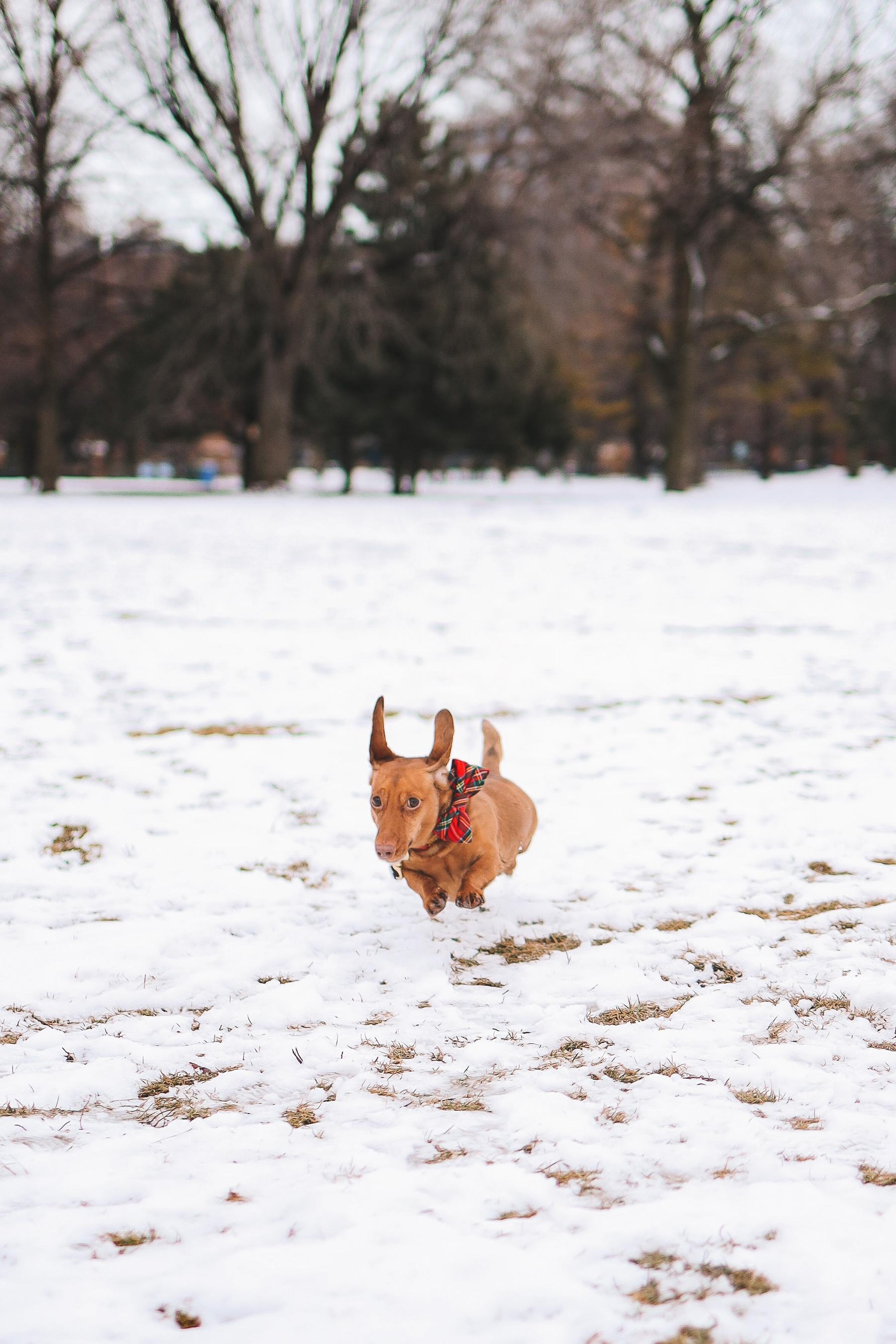 dog on the snow | Oz Park Snow Day