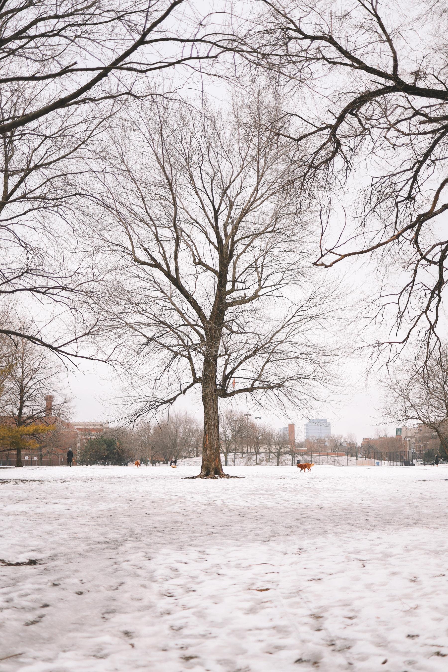 A Walk Through Lincoln Park