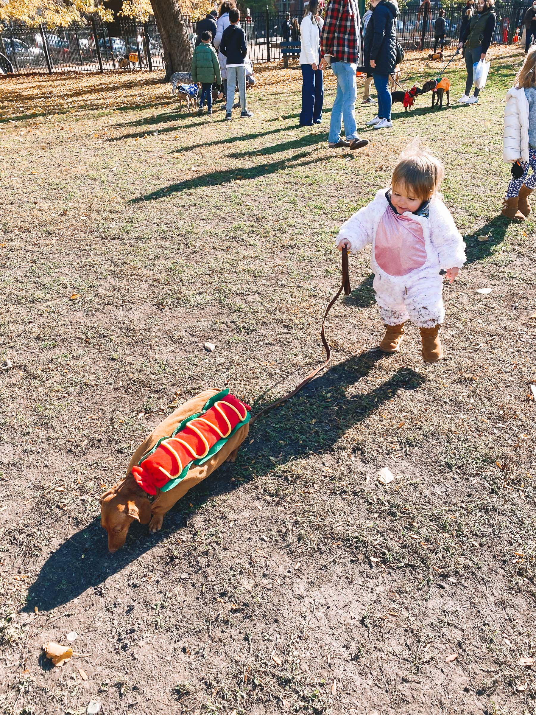 baby unicorn costume | Chicago Halloweenie Walk