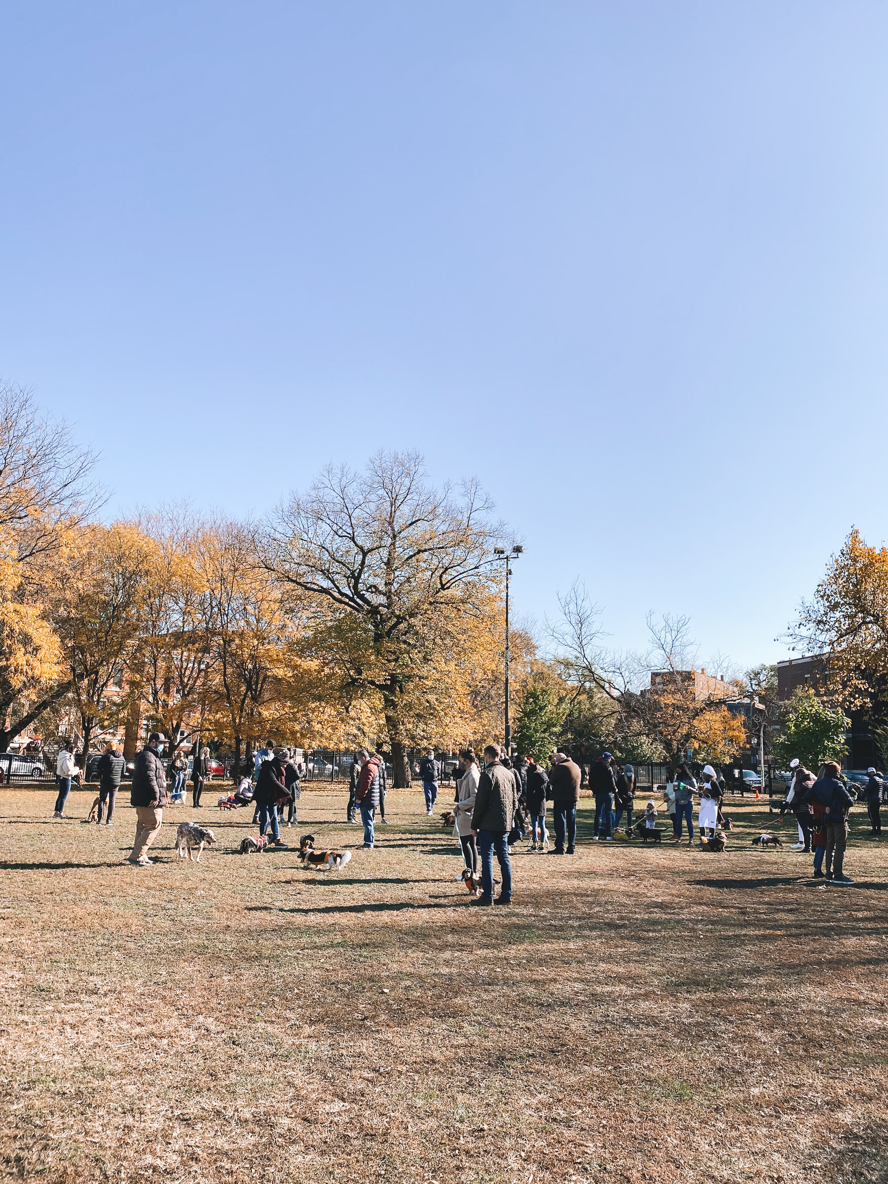 dachshunds chicago park