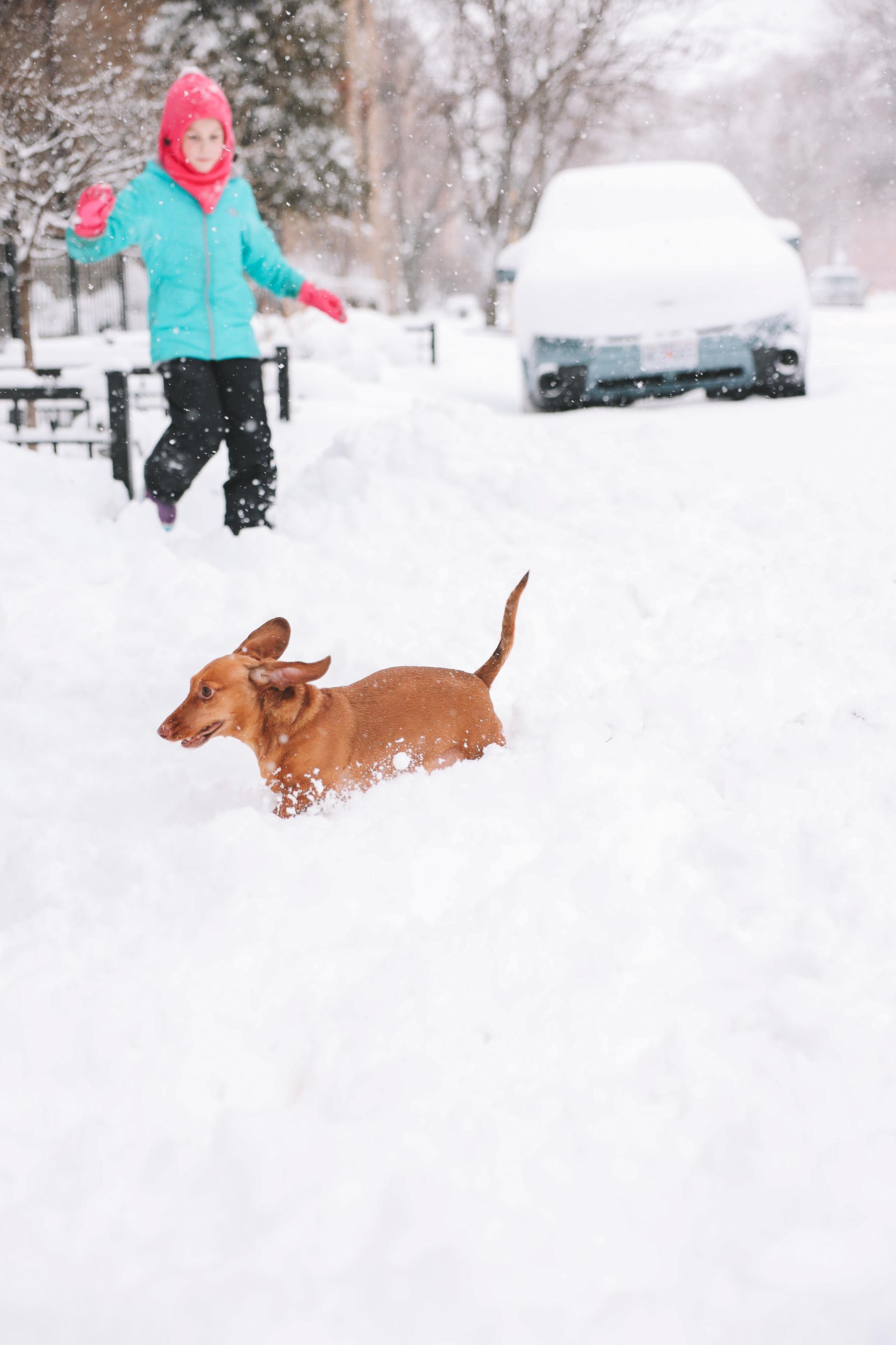 dog enjoying snow | My new lens