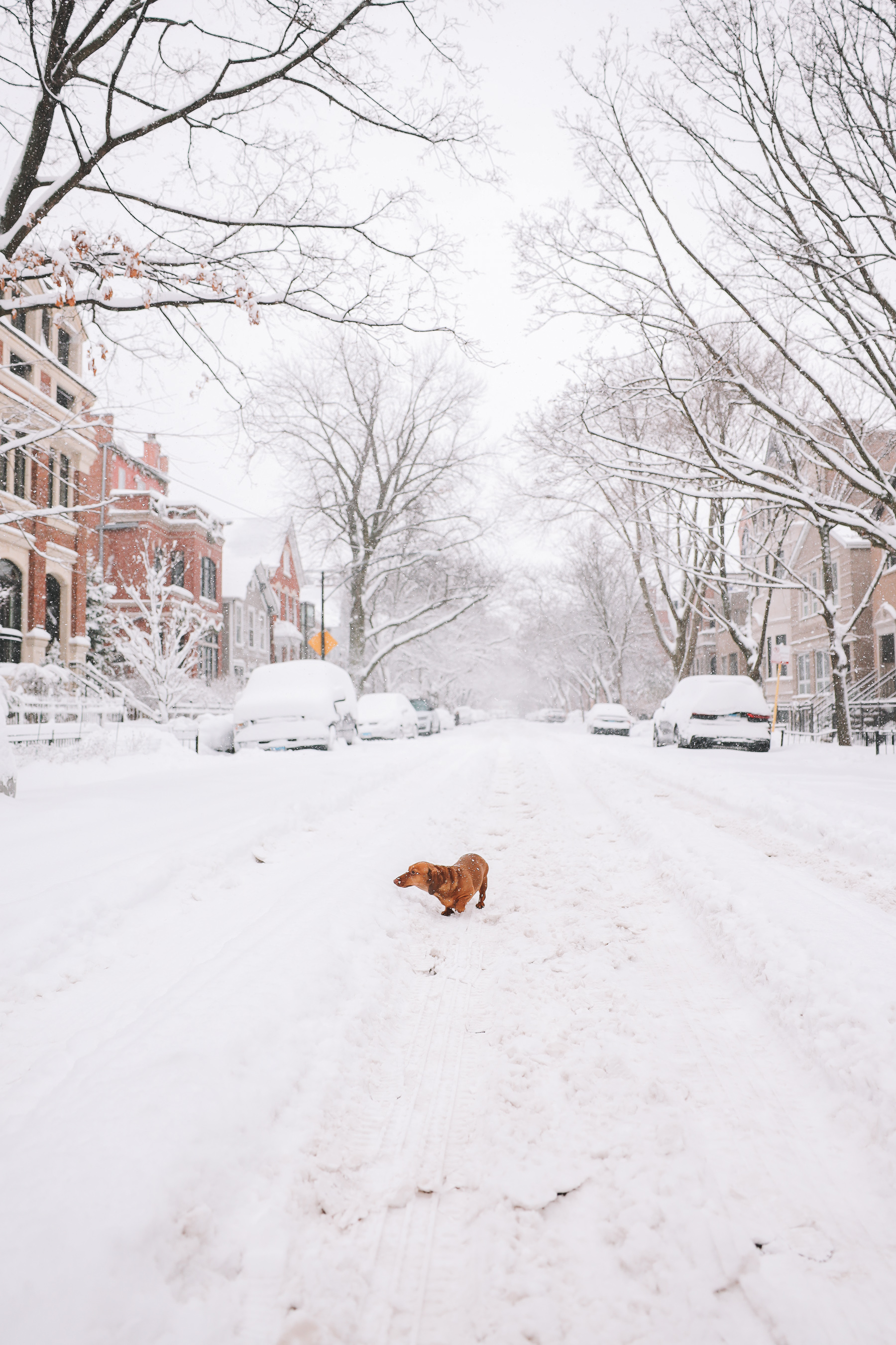 dog in the street covered in snow