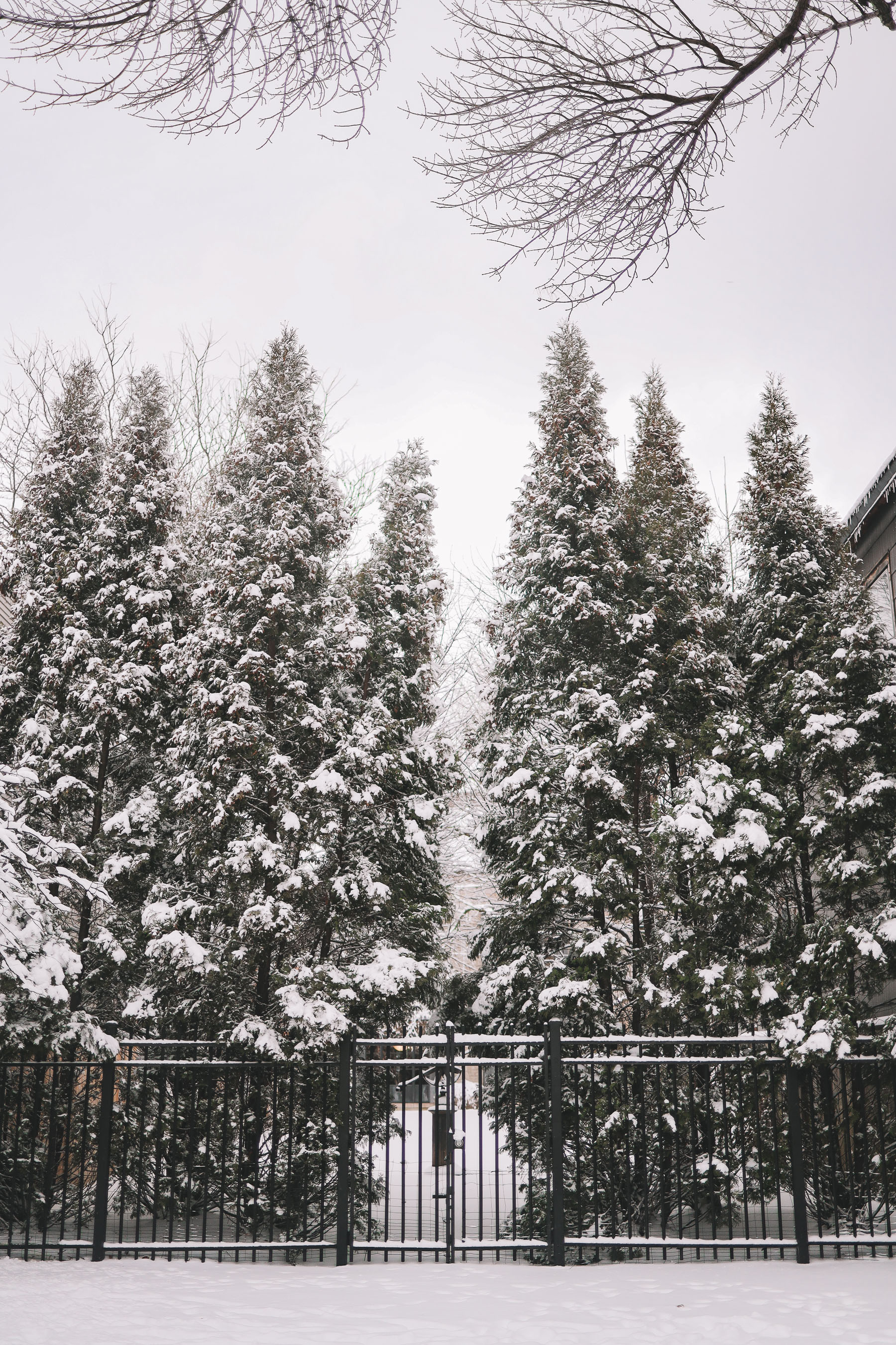 white chicago snow | Happiness Walk Through Lincoln Park