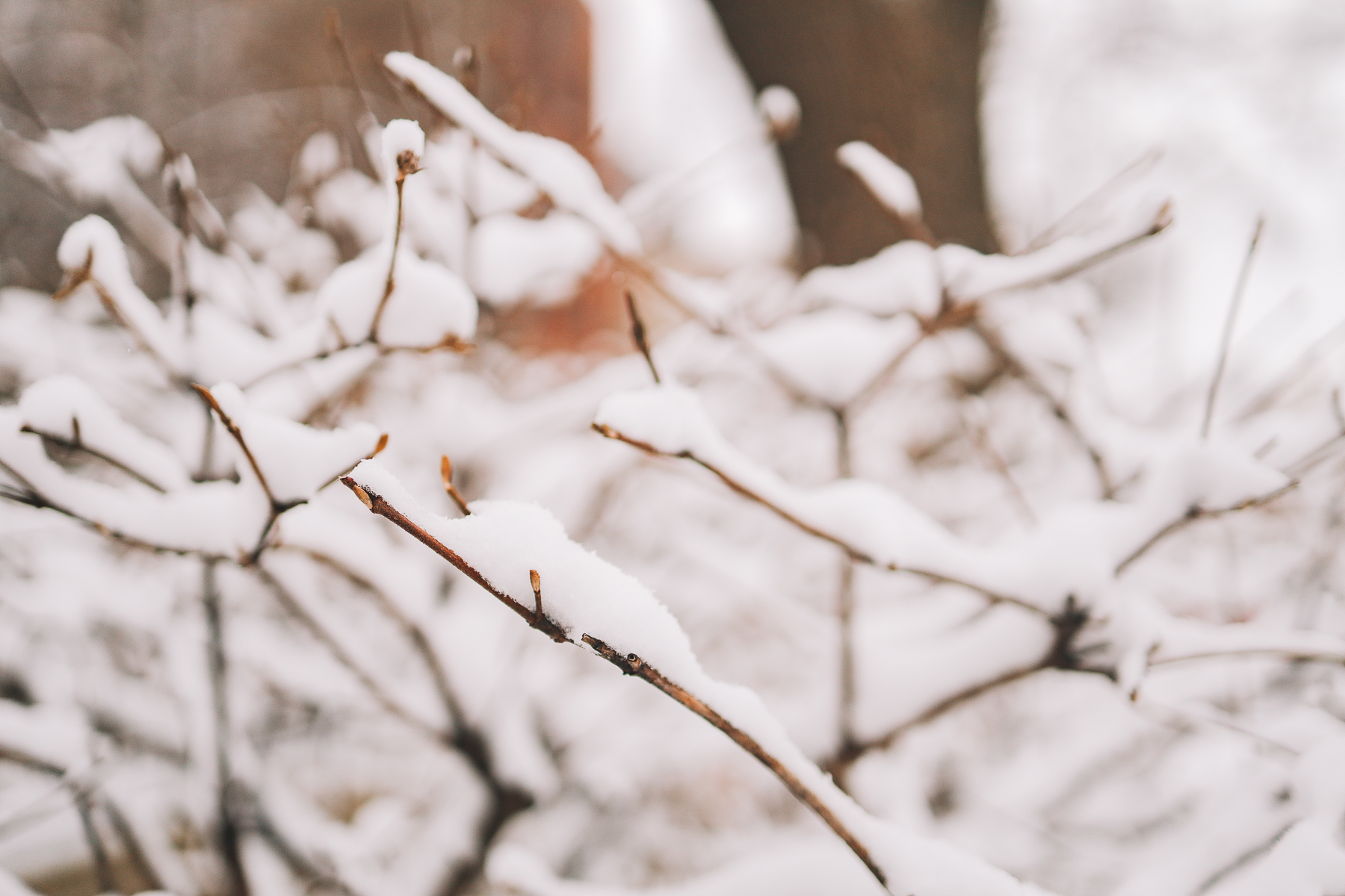 snow fall in branches