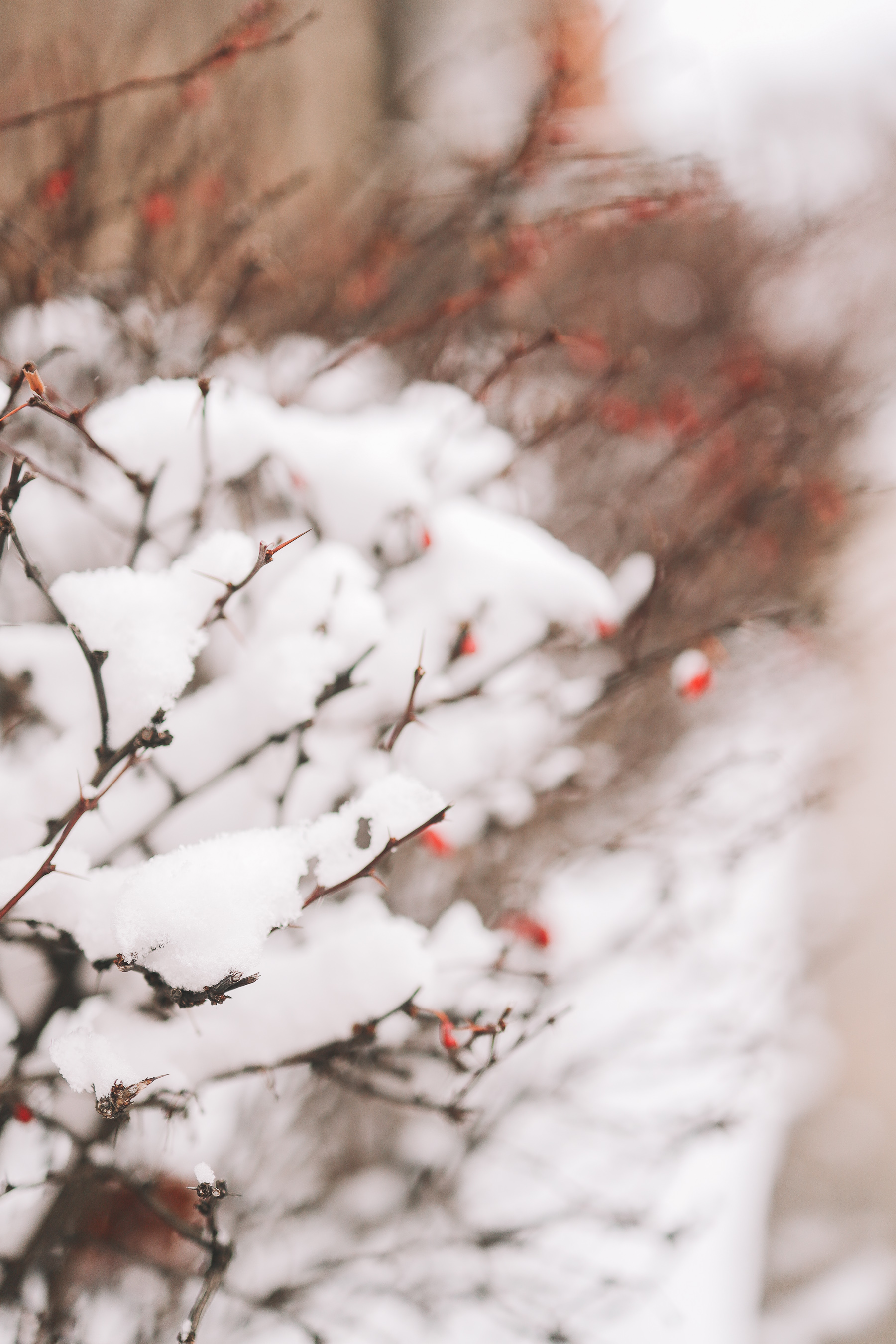 winter snow photography | Happiness Walk Through Lincoln Park
