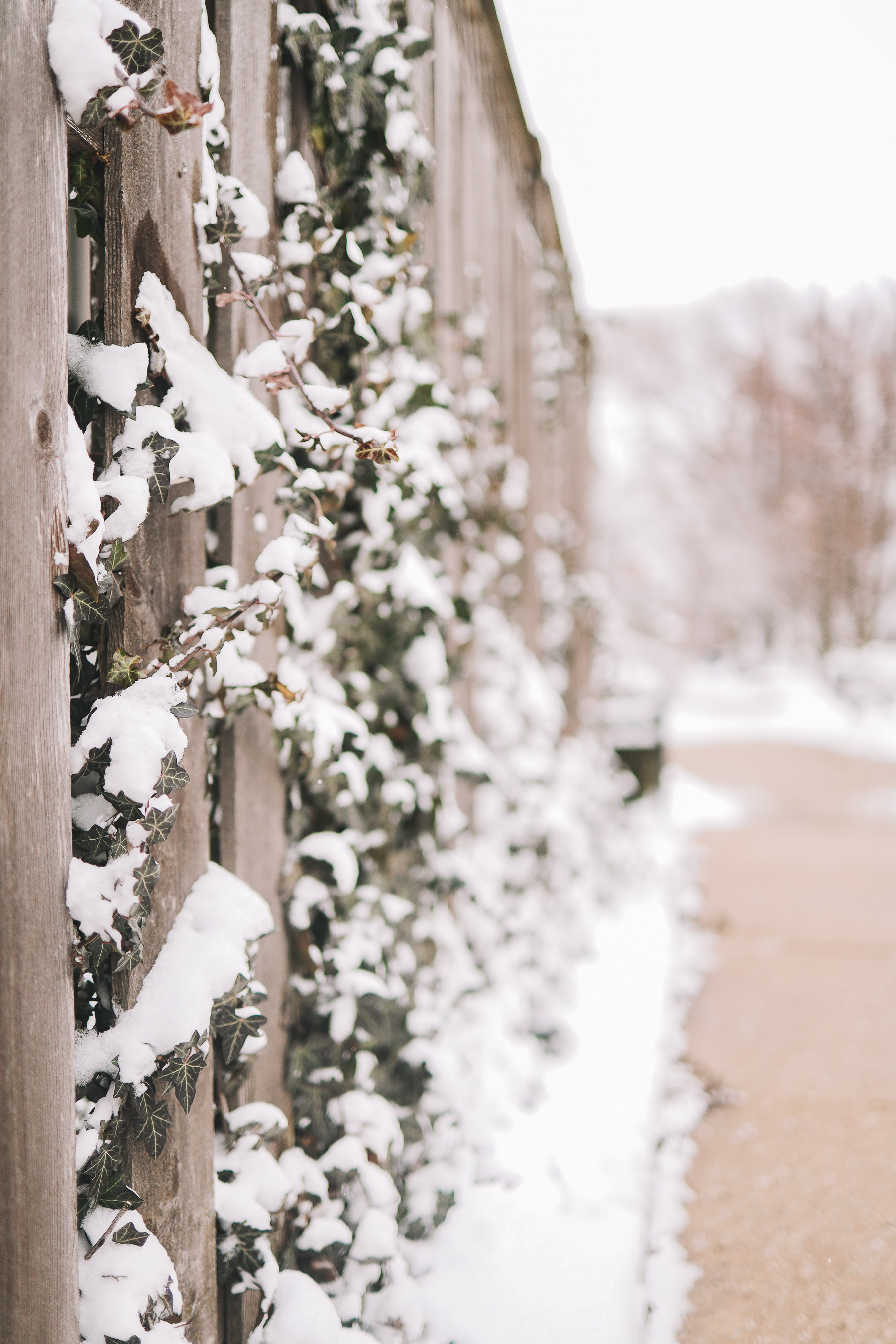 frozen chicago streets