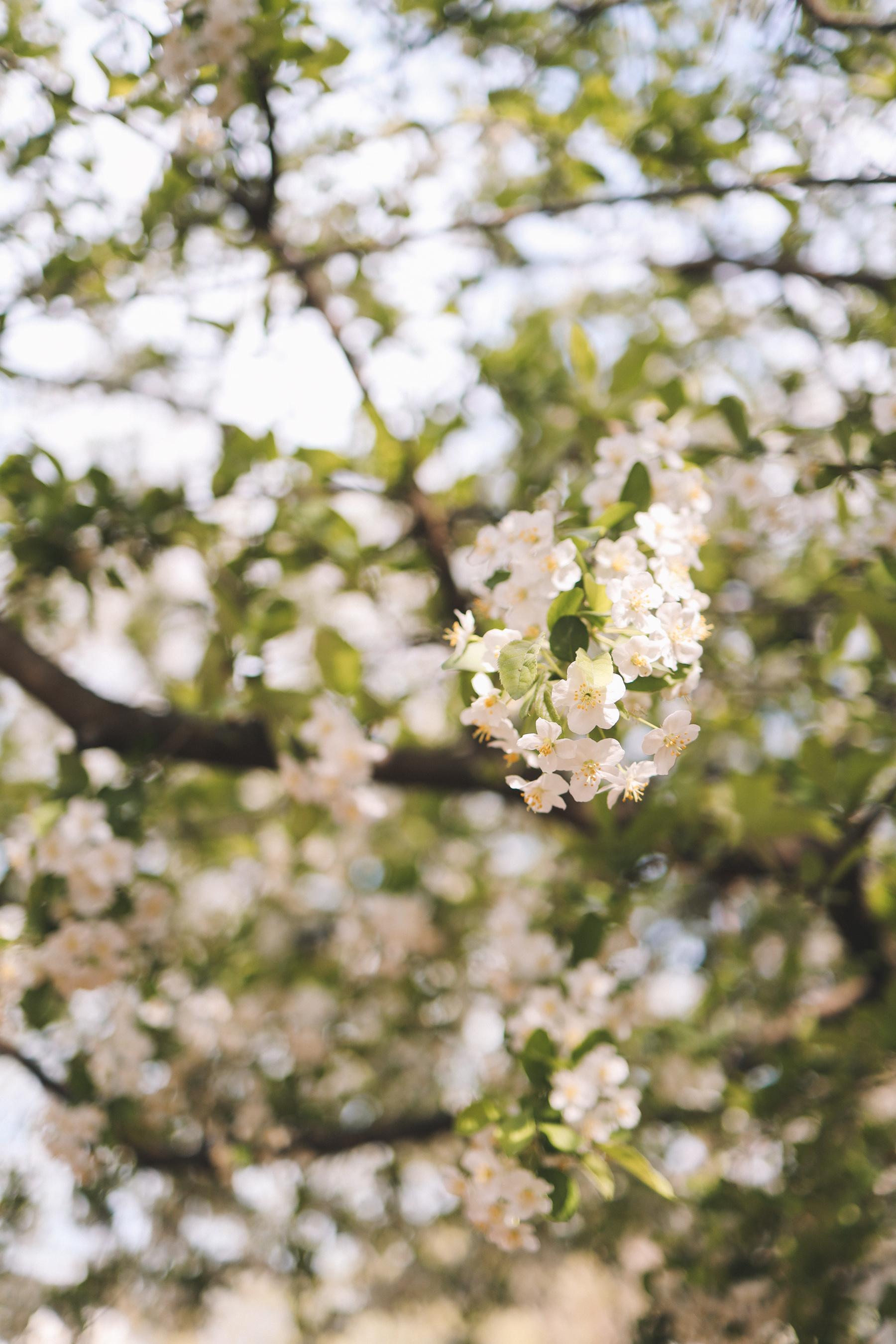 chicago spring bloom