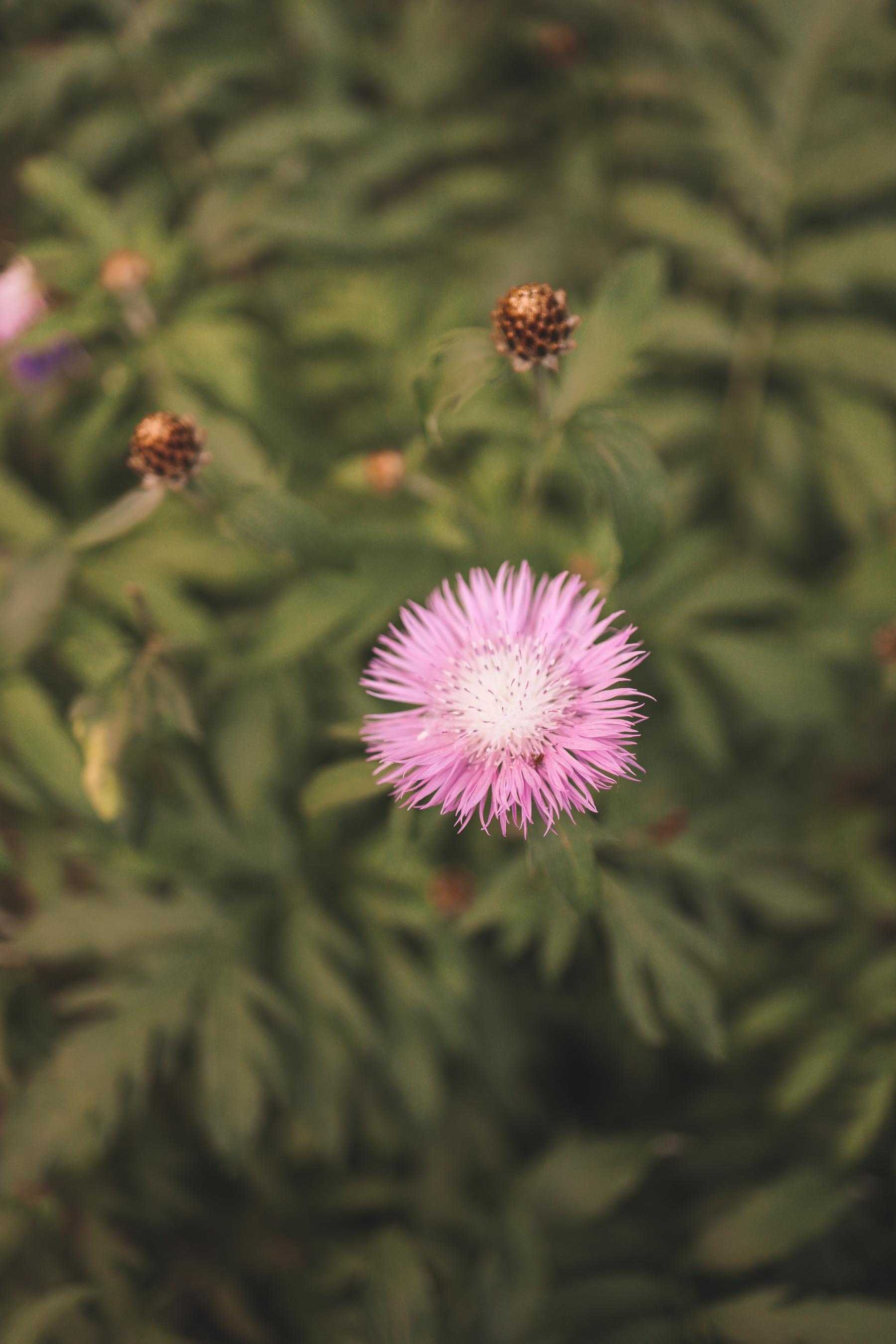 flower shot