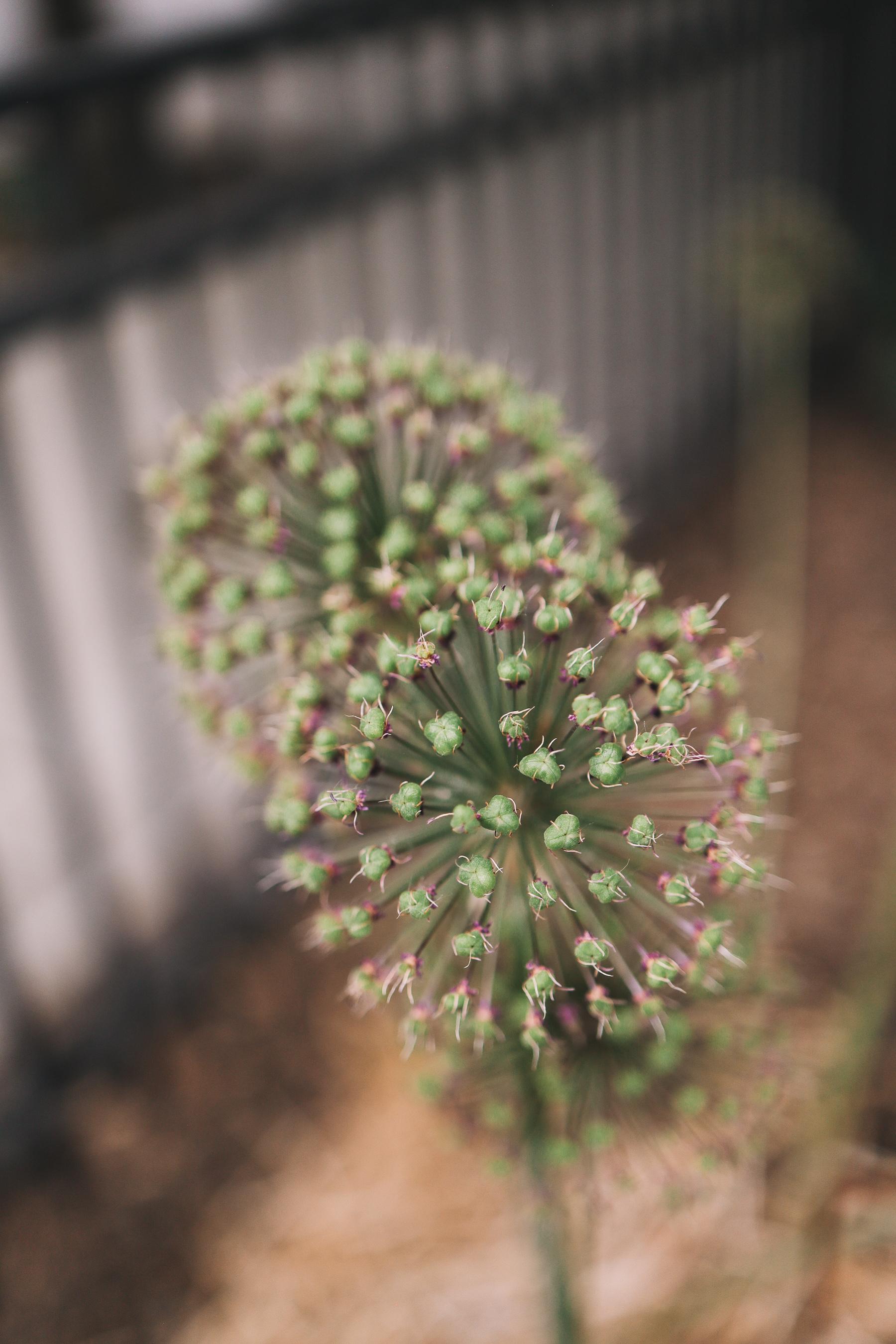 flower focused shot