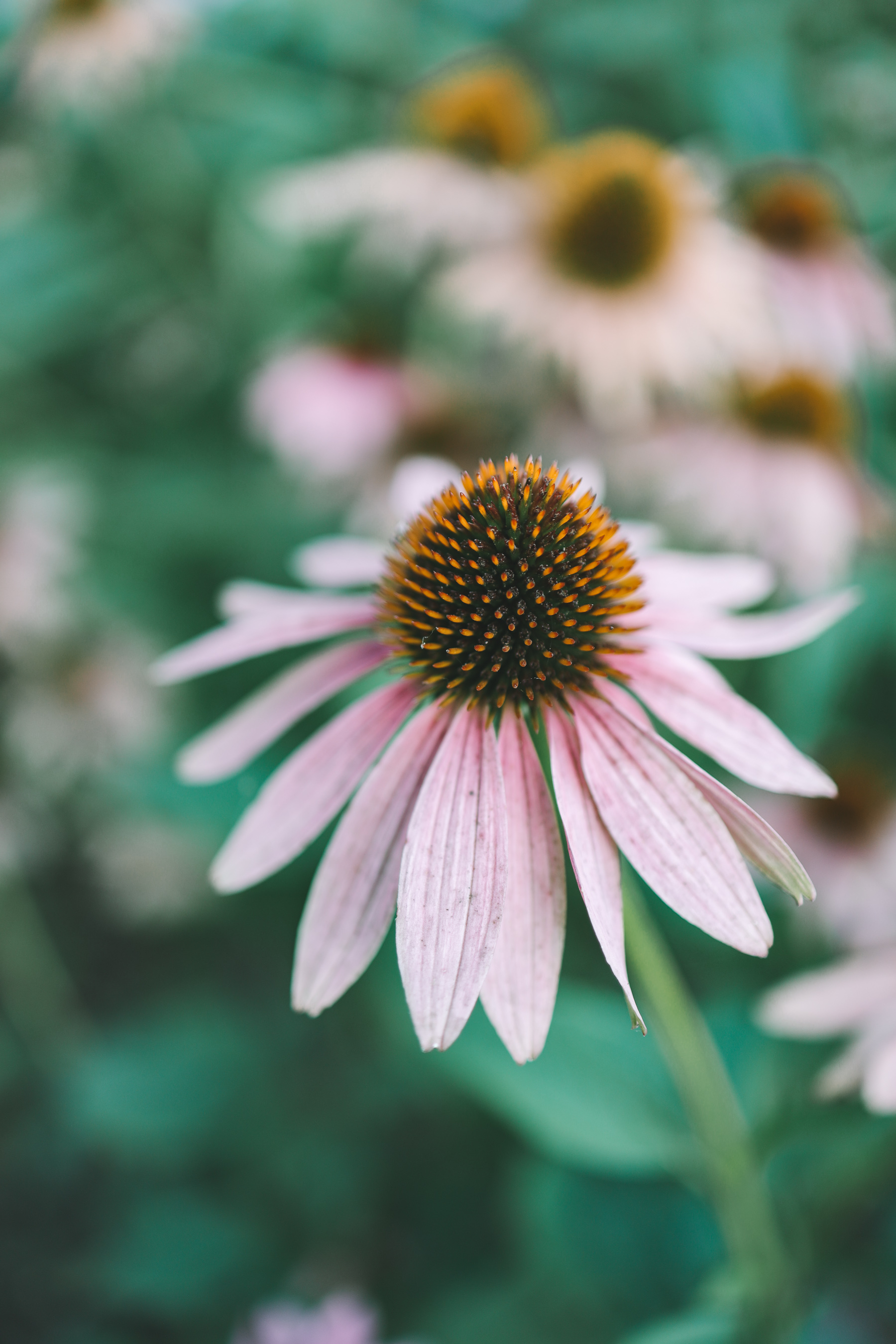 Flowers near Lake Bloomington
